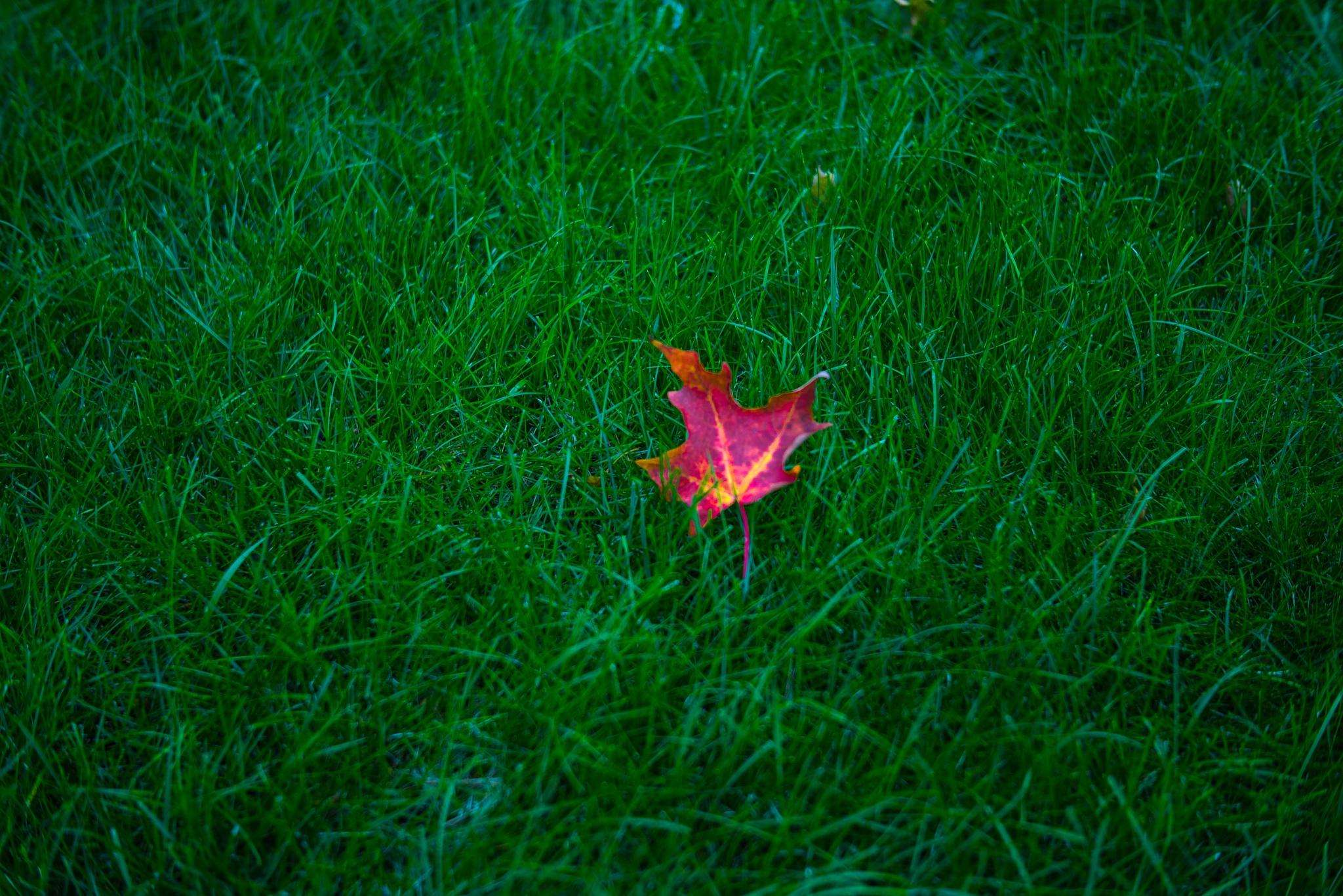 Autumn by Herb Drummond