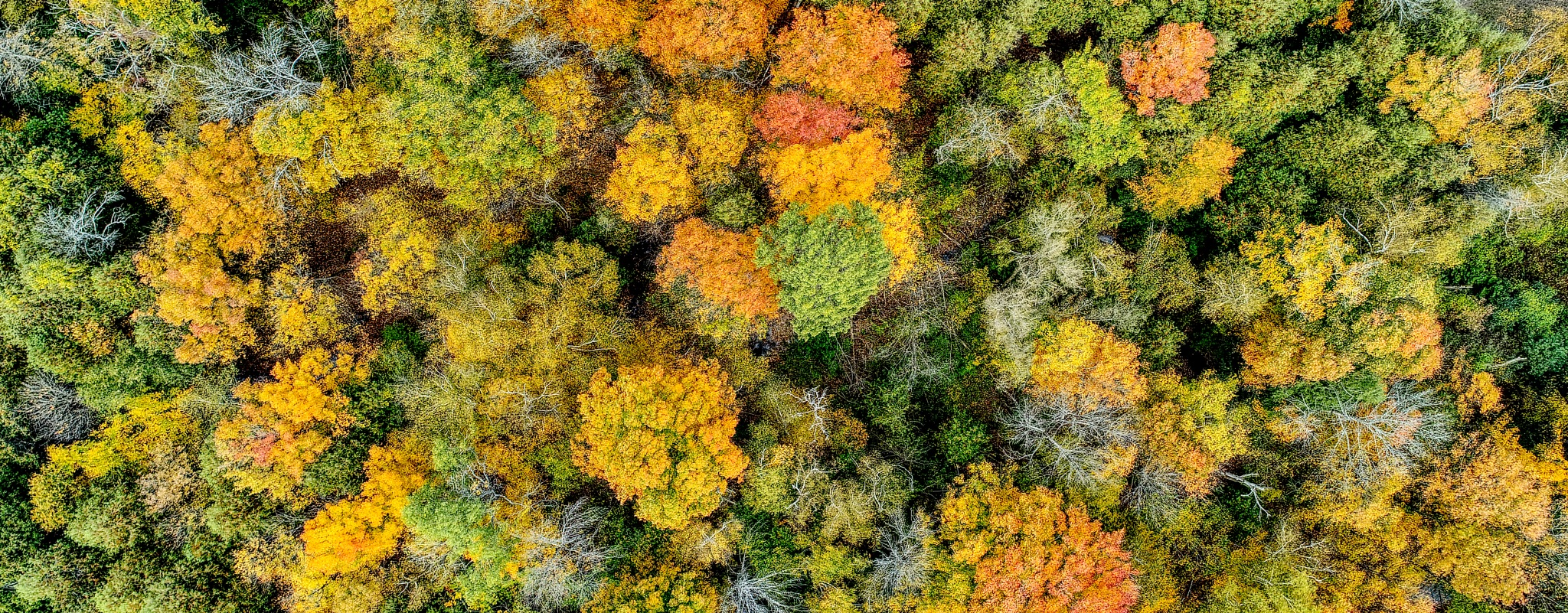 More Autumn Colours by Herb Drummond