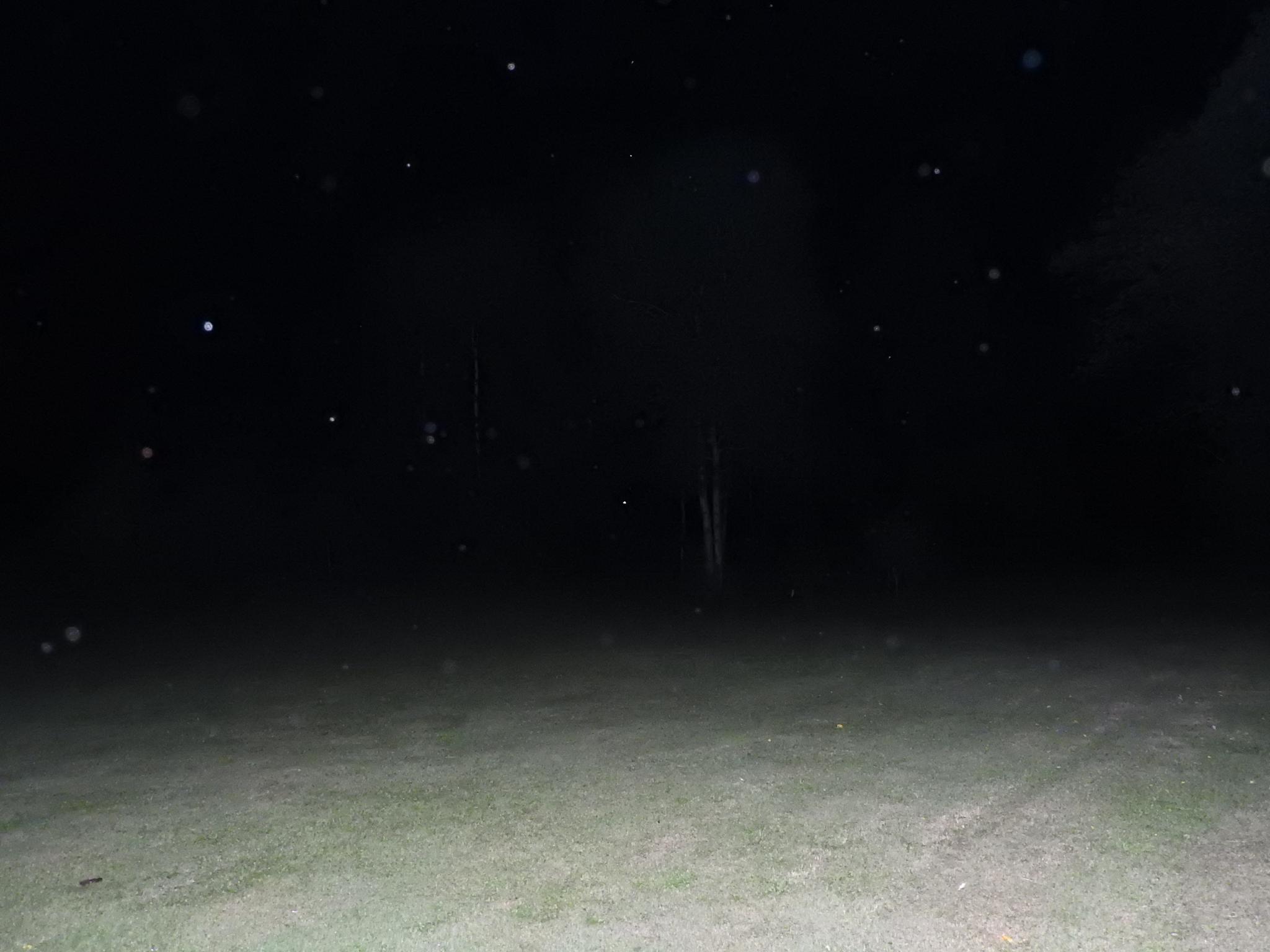 Last night's Orbs & Fireflies by Denni