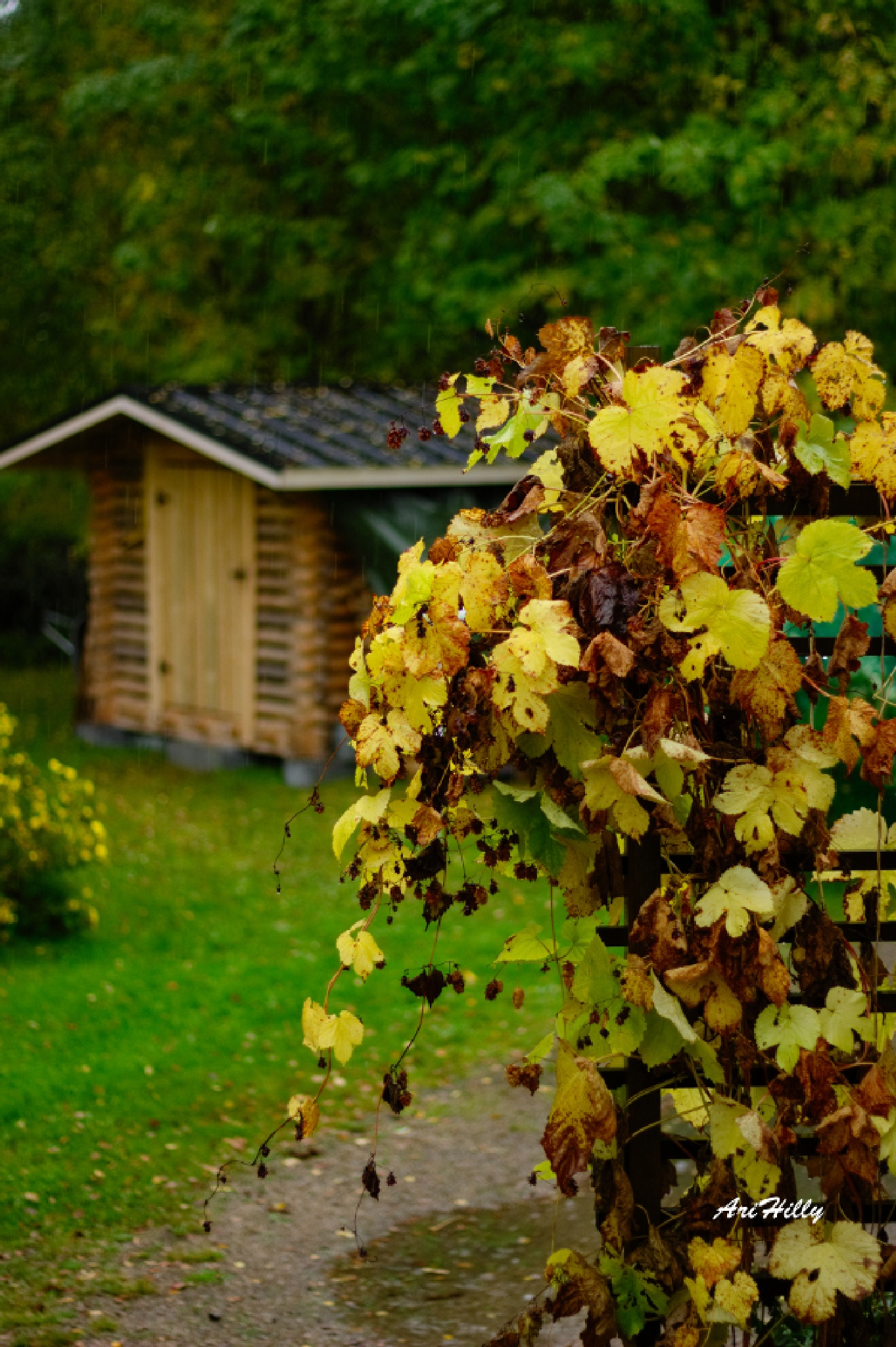#Autumn #Fall colours #Finland #Yellow #Shed by AriHilly