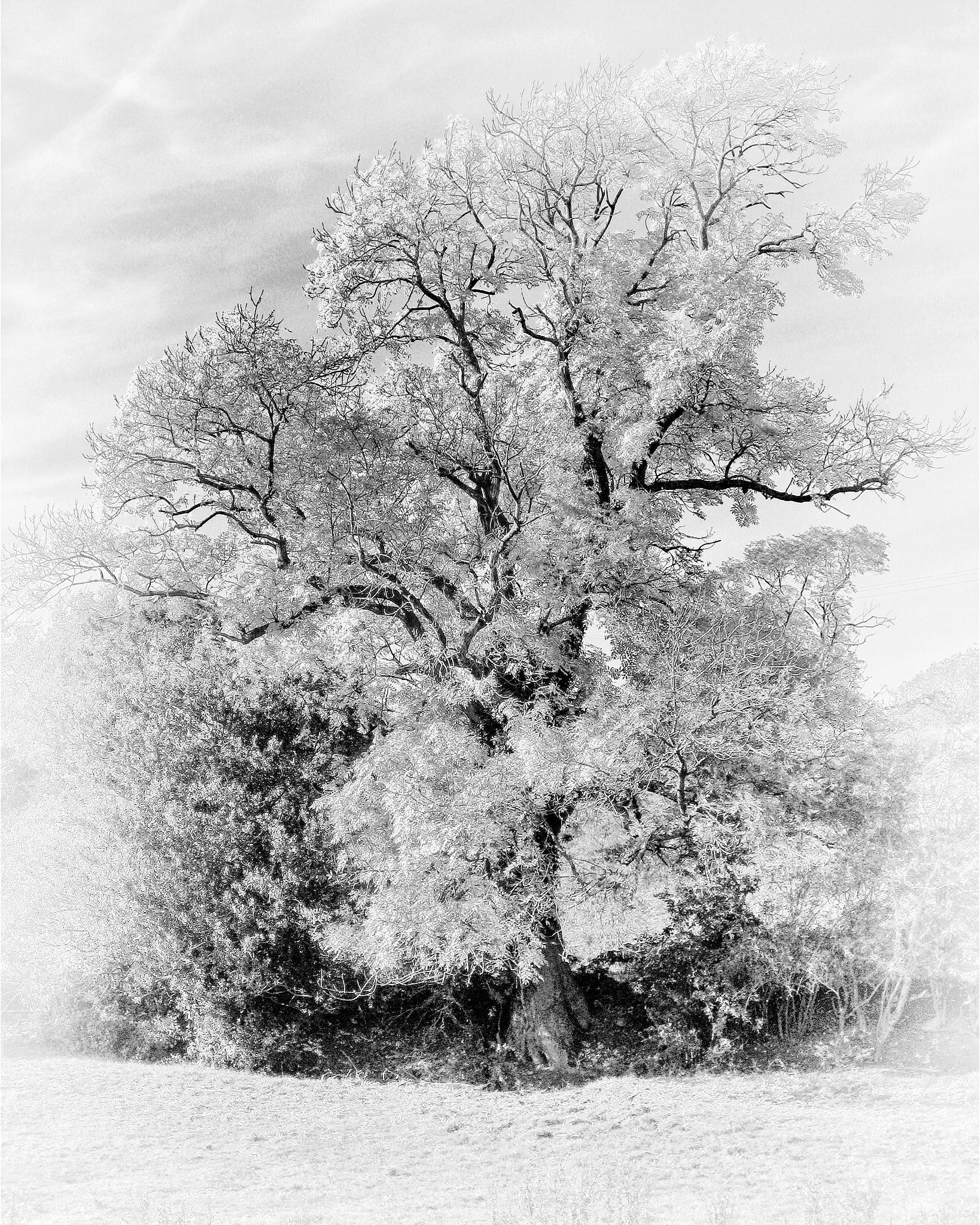 Lonesome tree in black and white by scrawcreations  (Stephen)