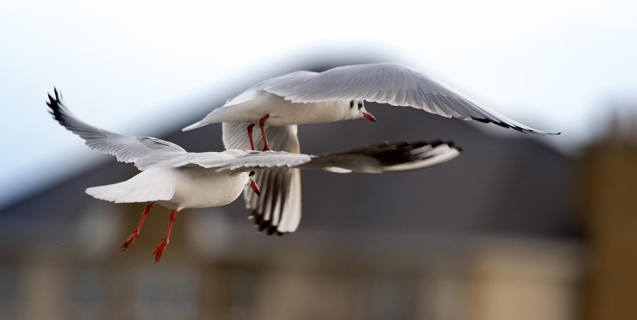 Gull formation by scrawcreations  (Stephen)
