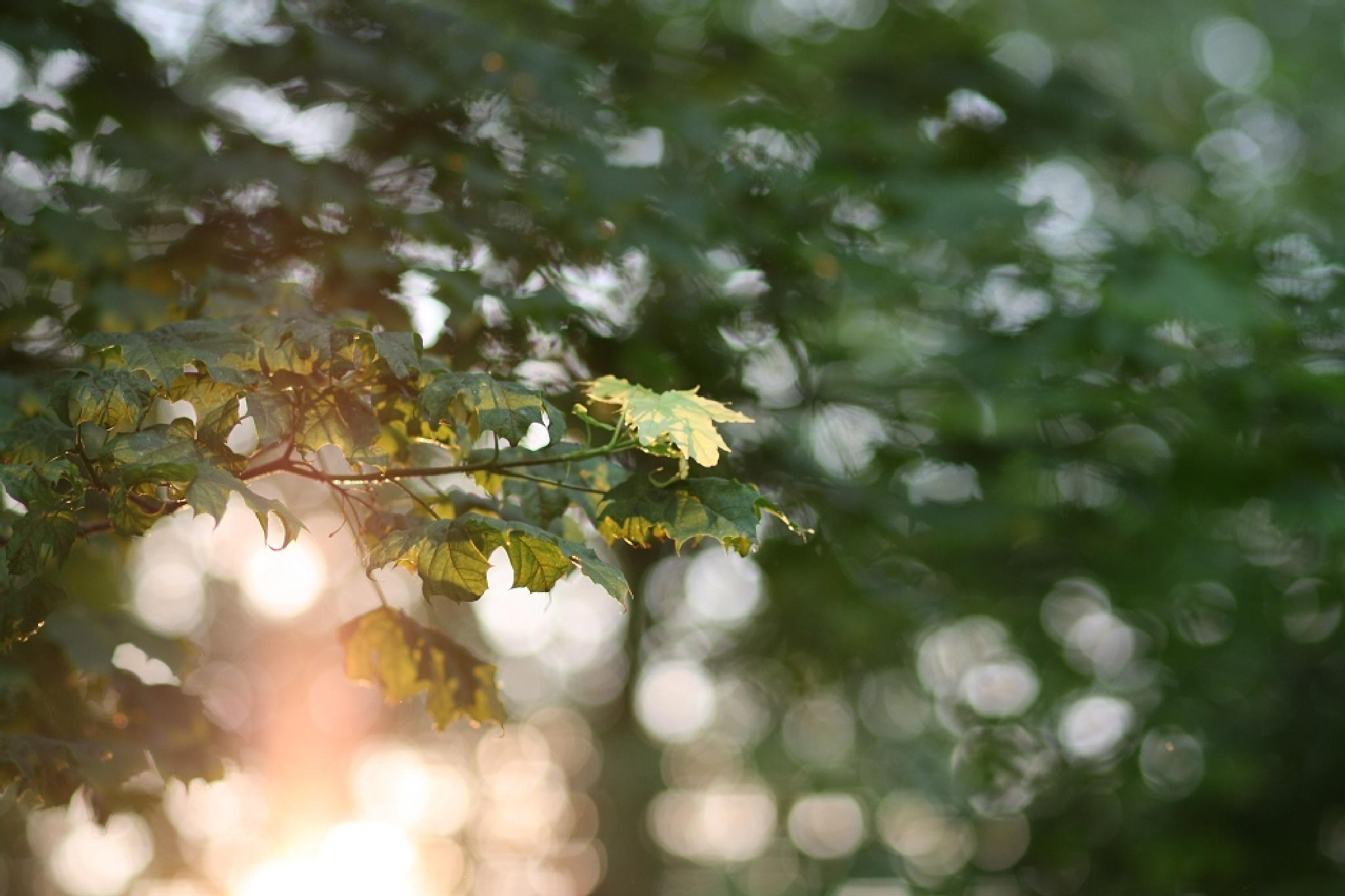 leaves by ullli23