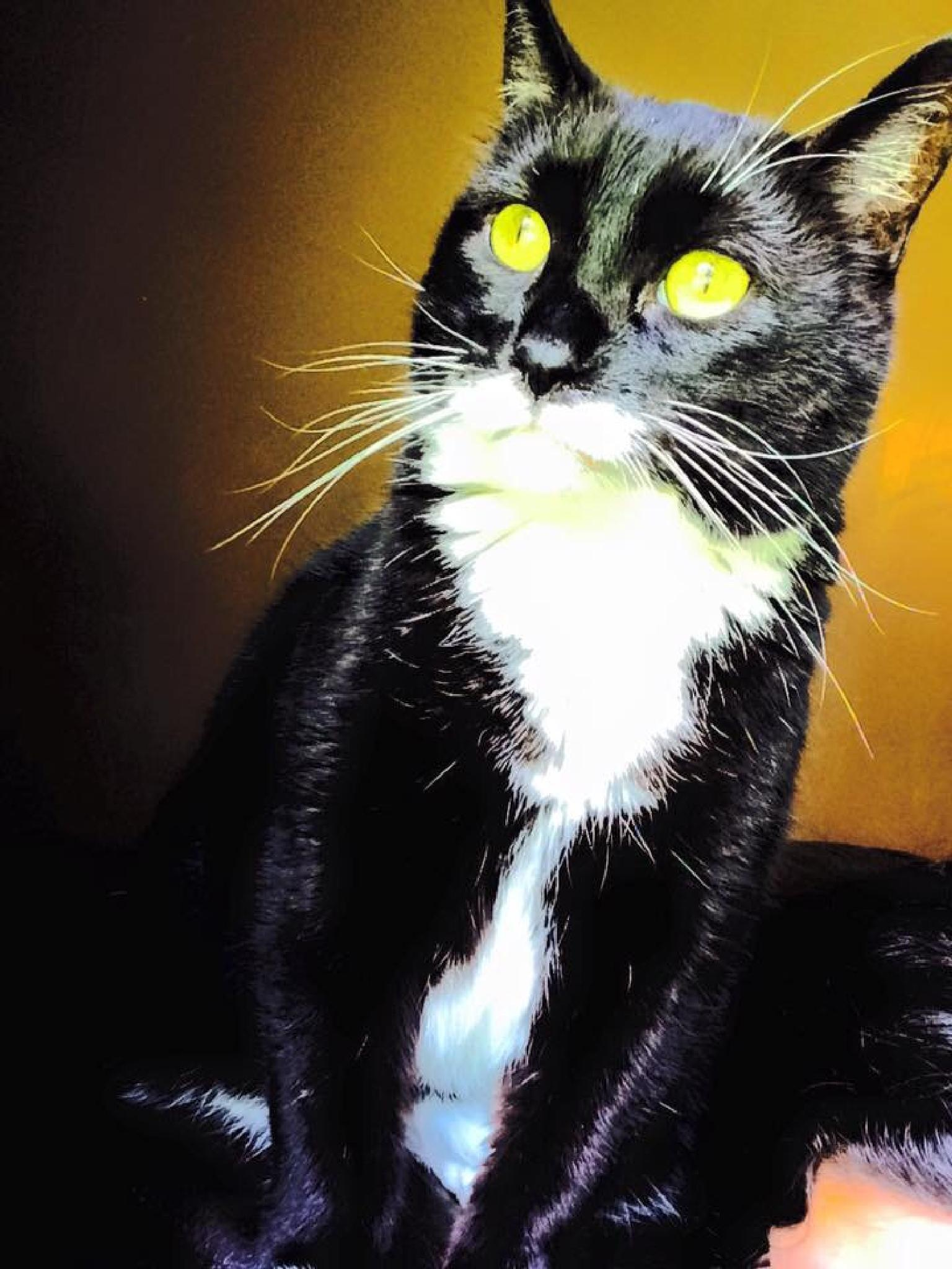 Stunning feline  by roetracie