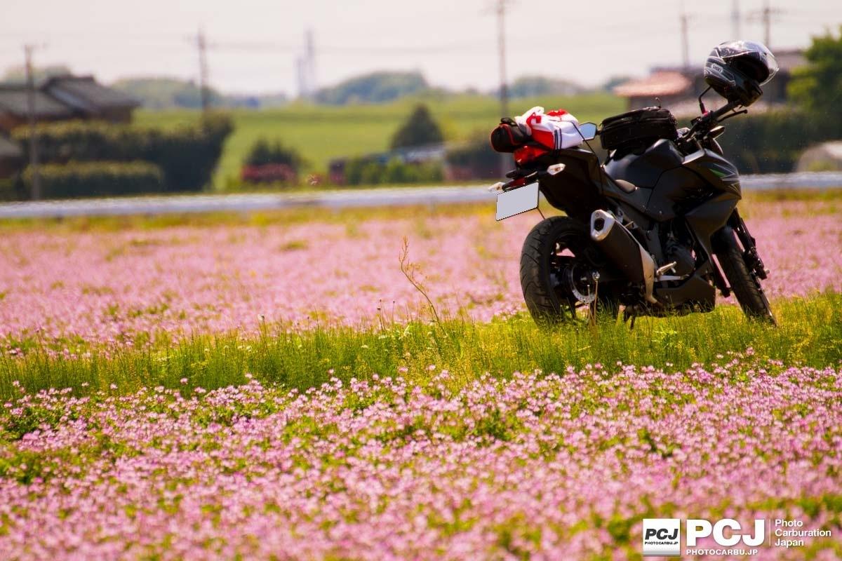 Black & Pink by kj_nemoto