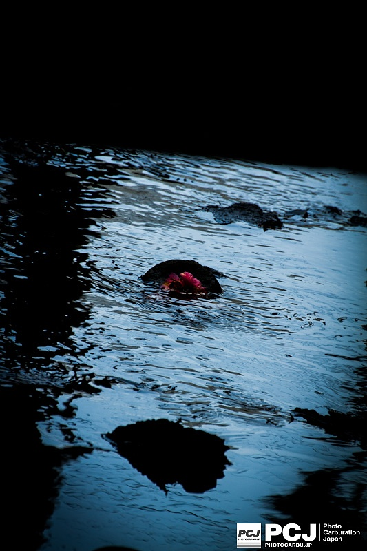 Photo in Nature #flower #water #red #blue #black