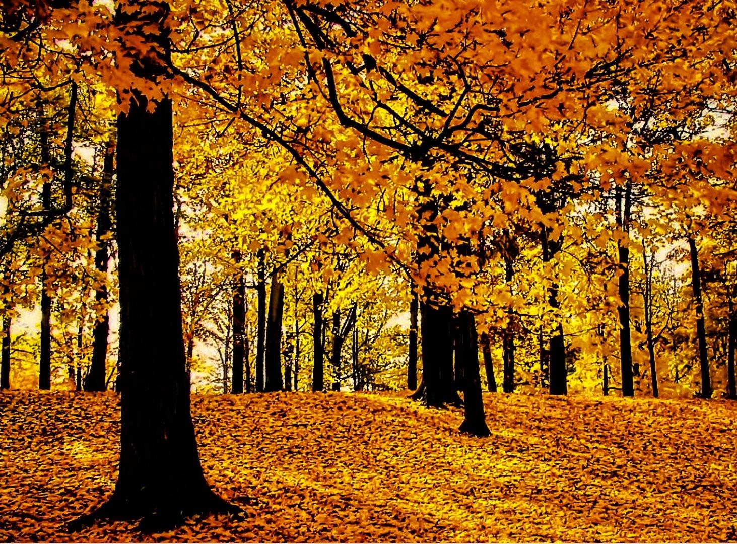 Beech Forest by Gregorio Emper