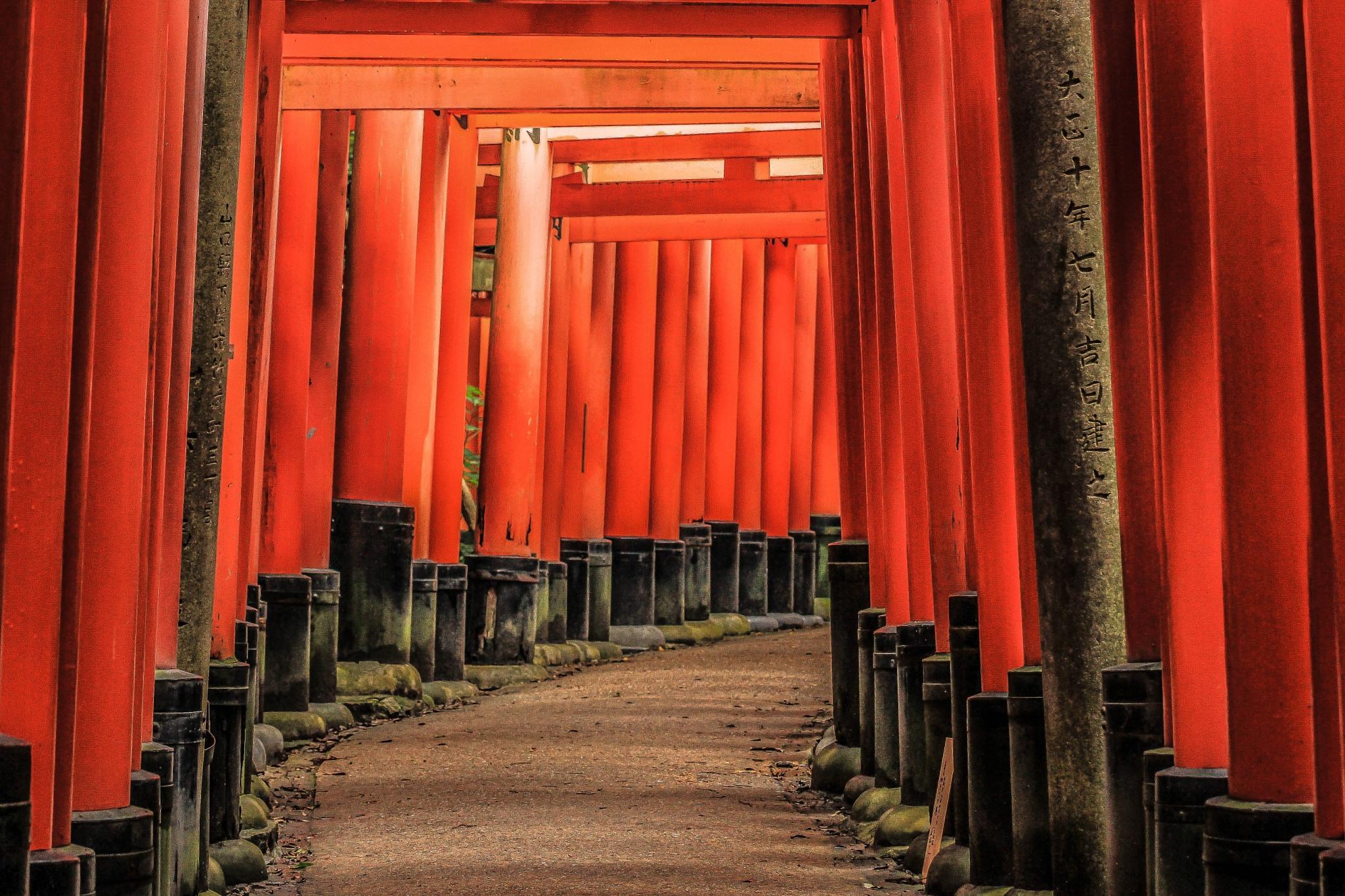 fushimi inari shrine by julz