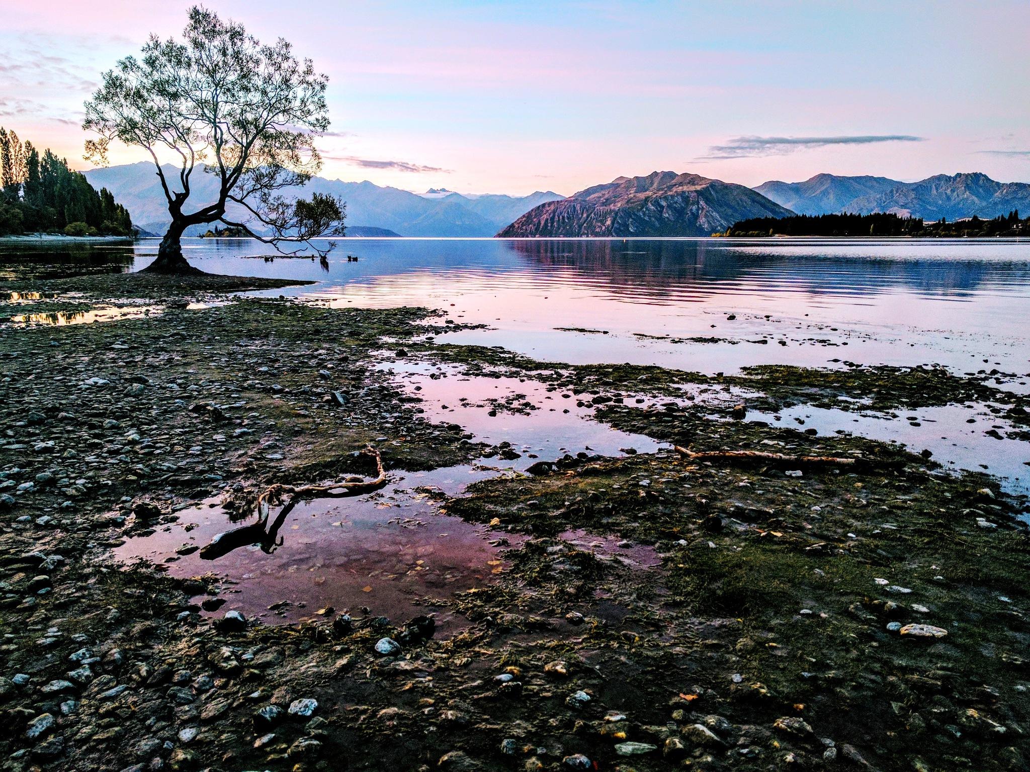 lake wanaka tree by julz