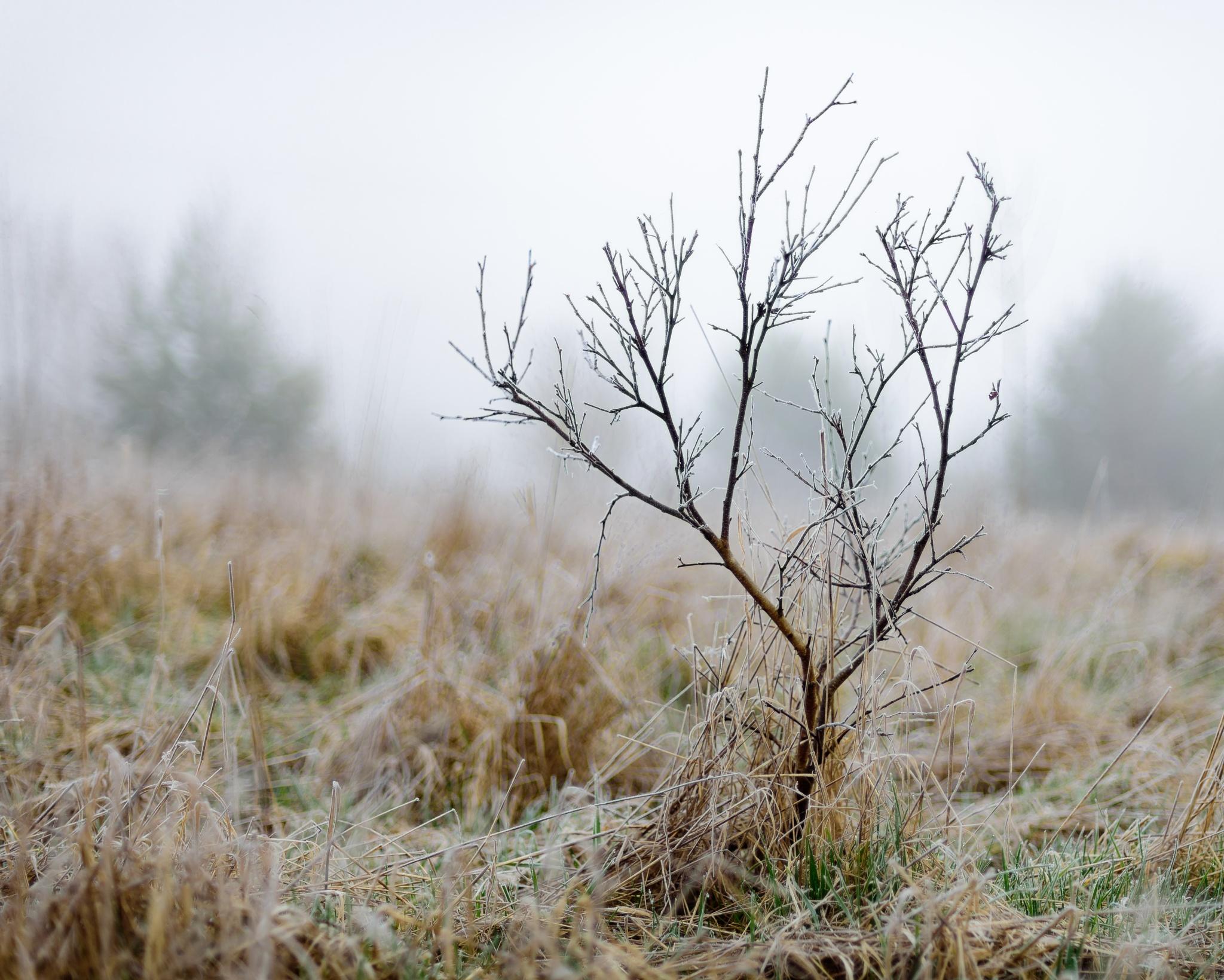 Frosty morning by Miroslav Ondříšek