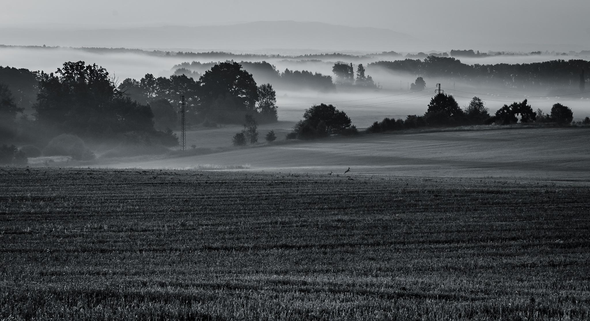 Morning joy of the roes by Miroslav Ondříšek