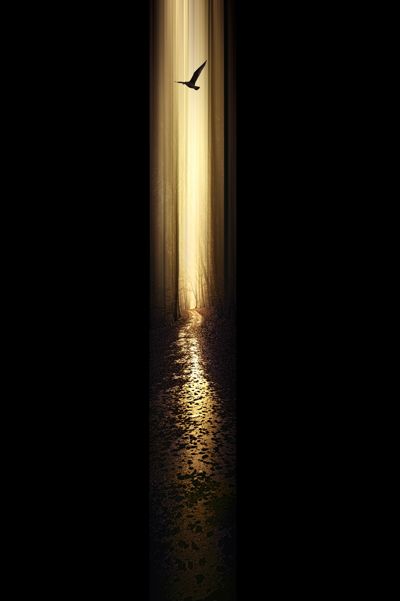 andthe Light shines in the darkness by John Noe