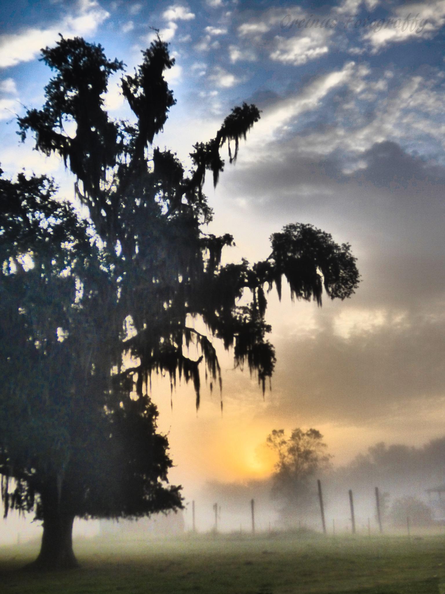 Cypress Island Preserve Foggy Dawn by OrcinusFotograffy