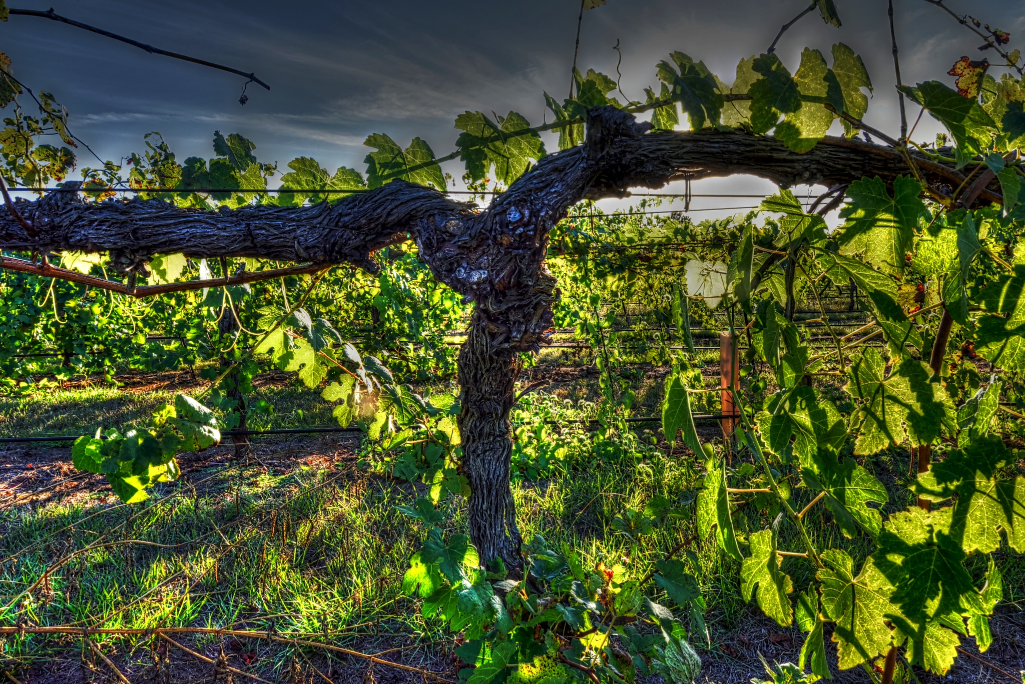 Gnarly by kdmoody56