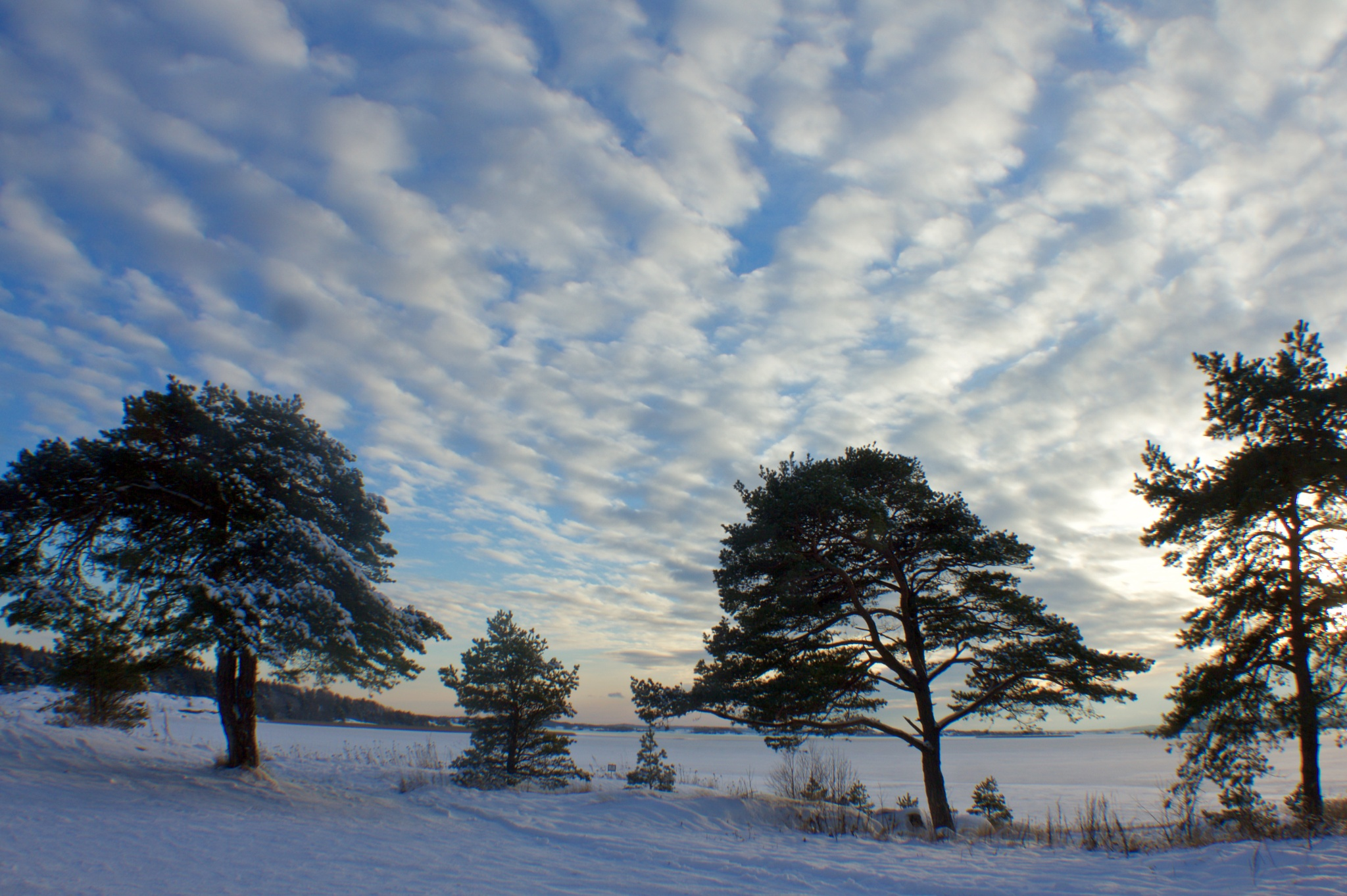 freezing cold and beautiful by Cecilie Hansteensen