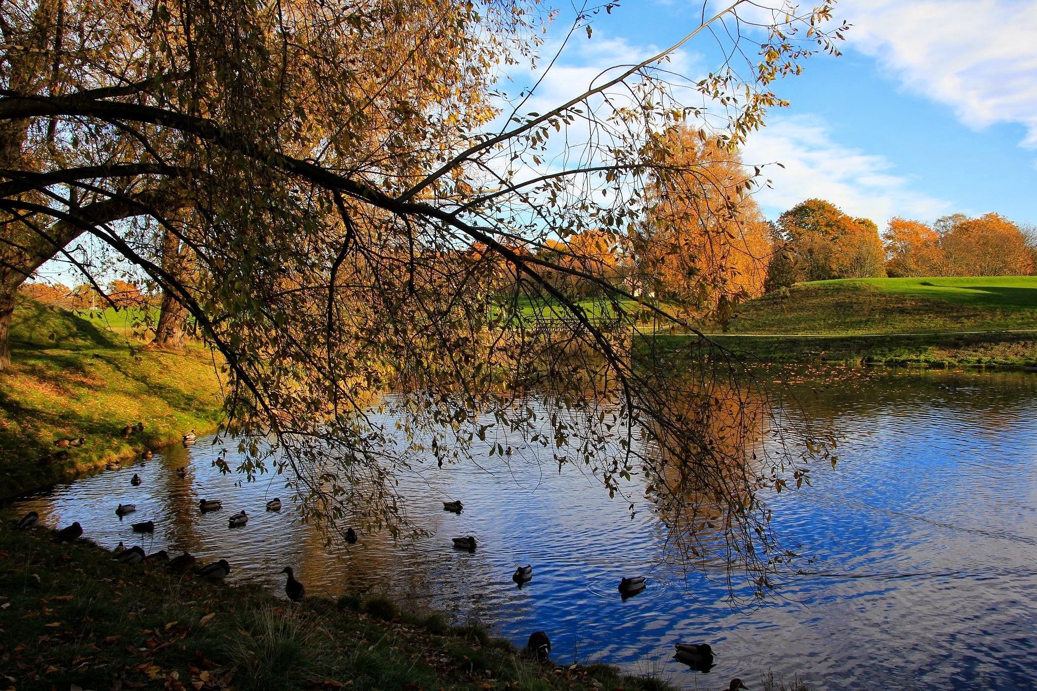 Autumn II by Cecilie Hansteensen