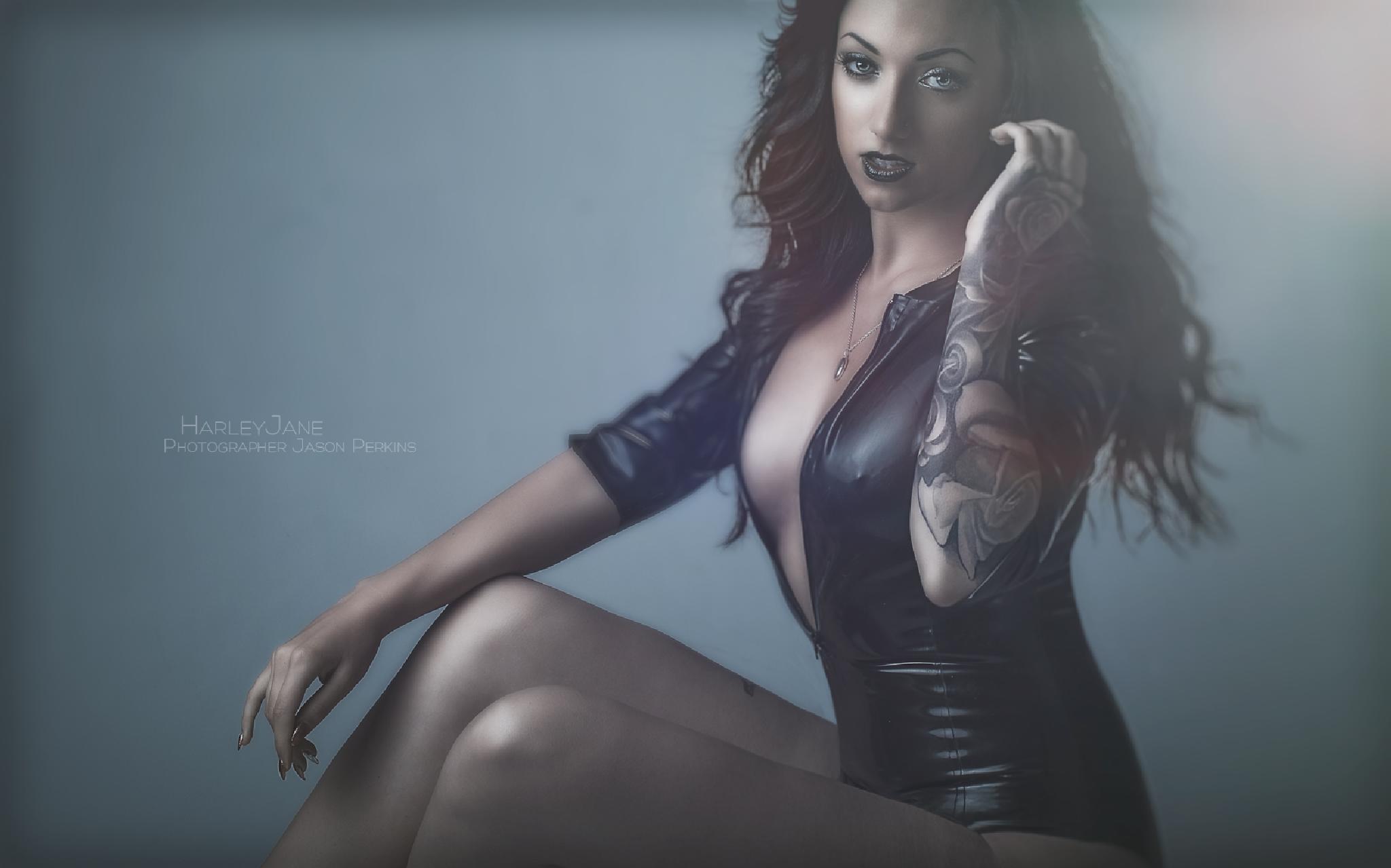 Harley by Jason Perkins