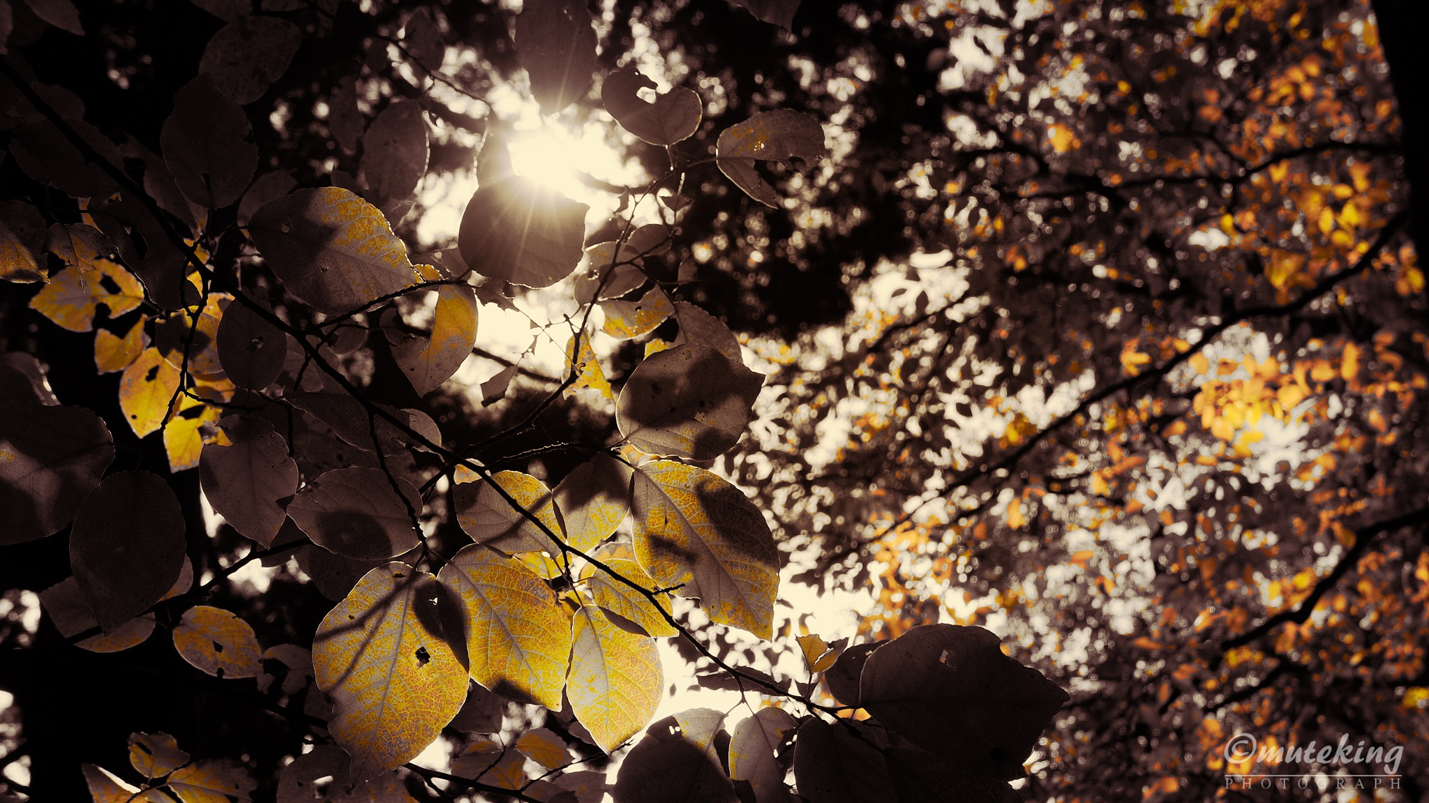 Autumn leaves of Mt. by muteking