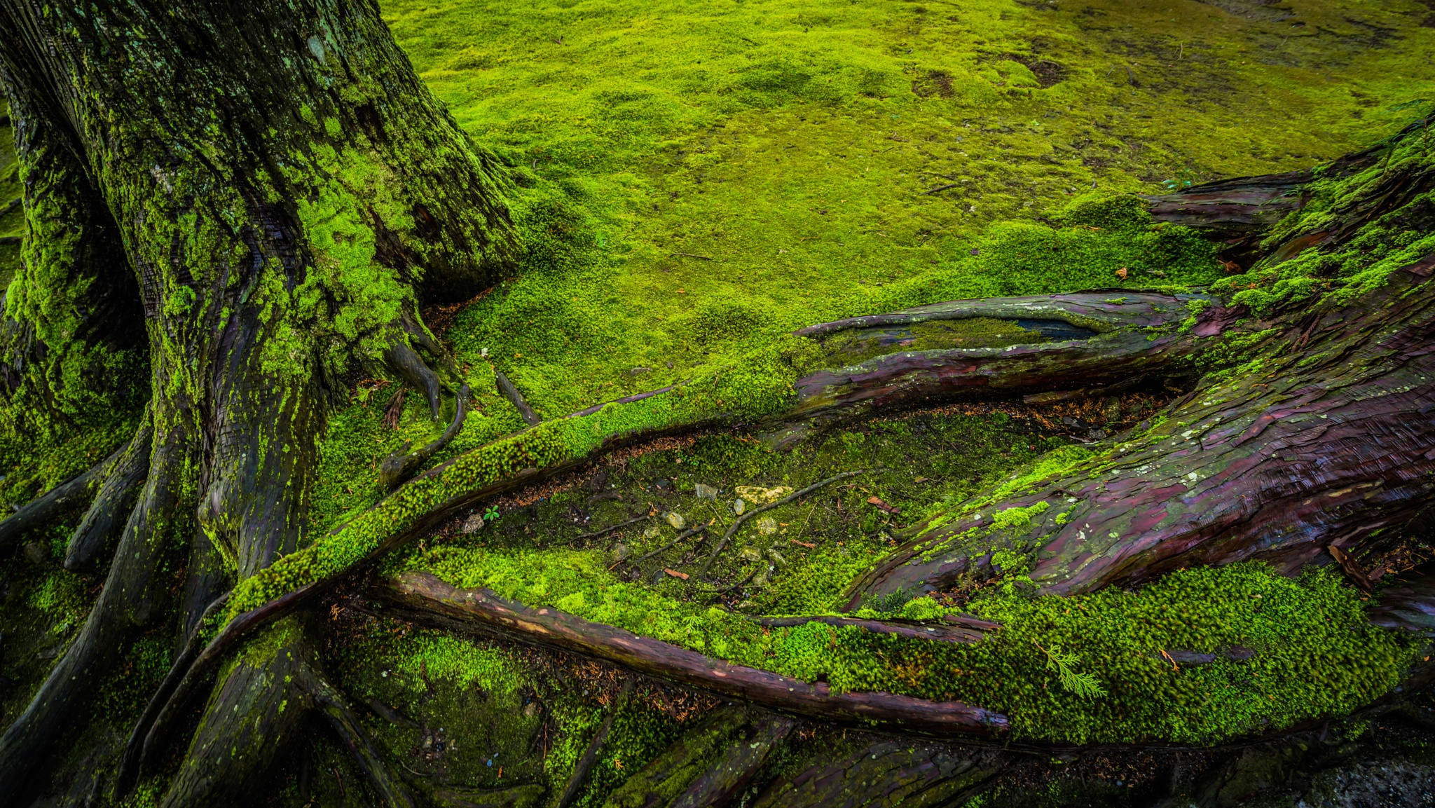 Battle of moss and roots by muteking