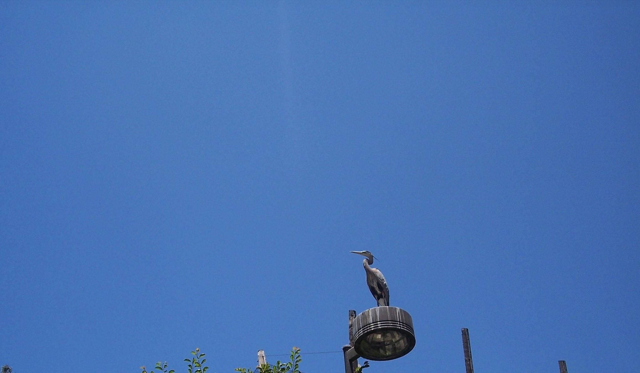 Crane Way Up High by ssmjdd