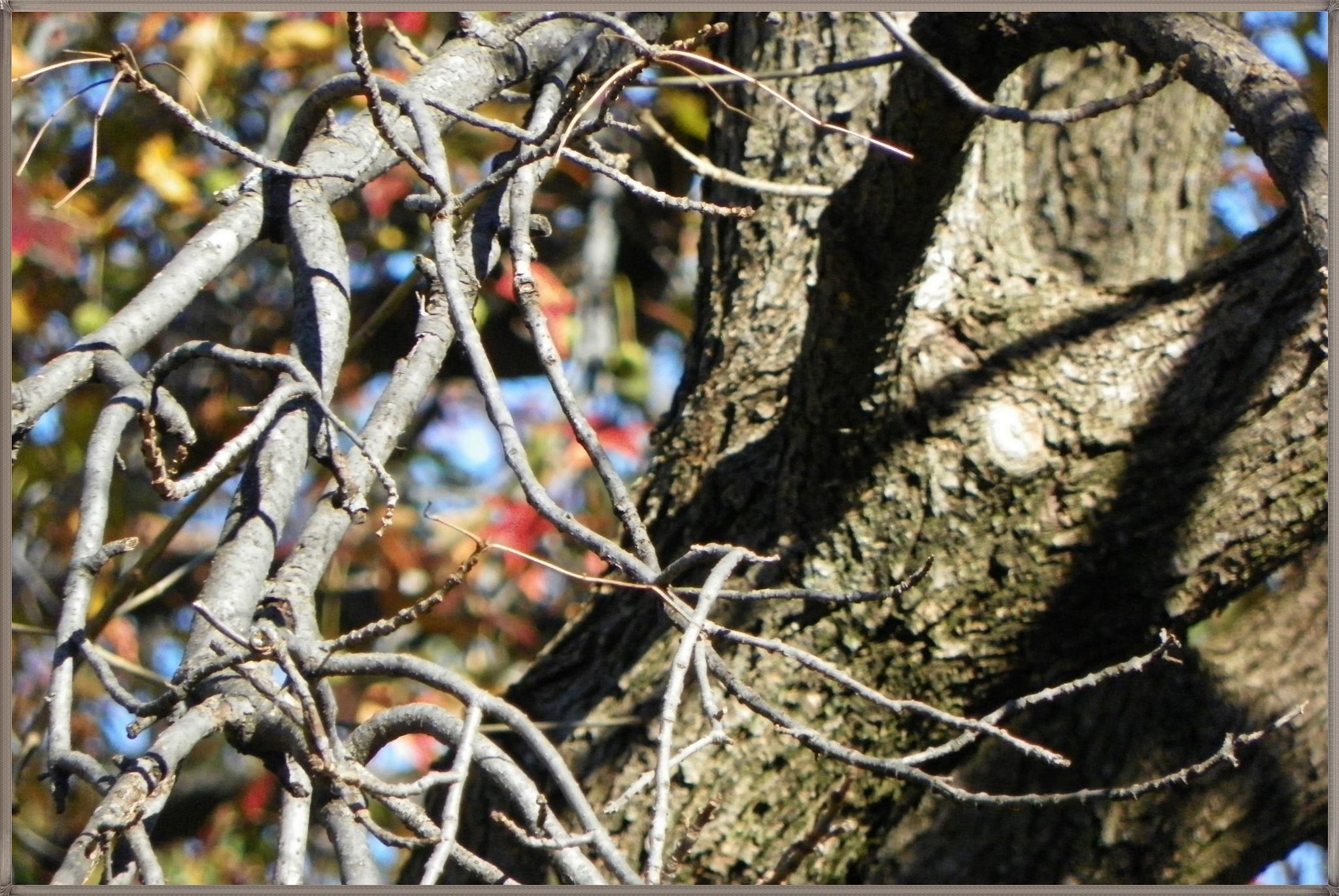 Branch Shadows by ssmjdd