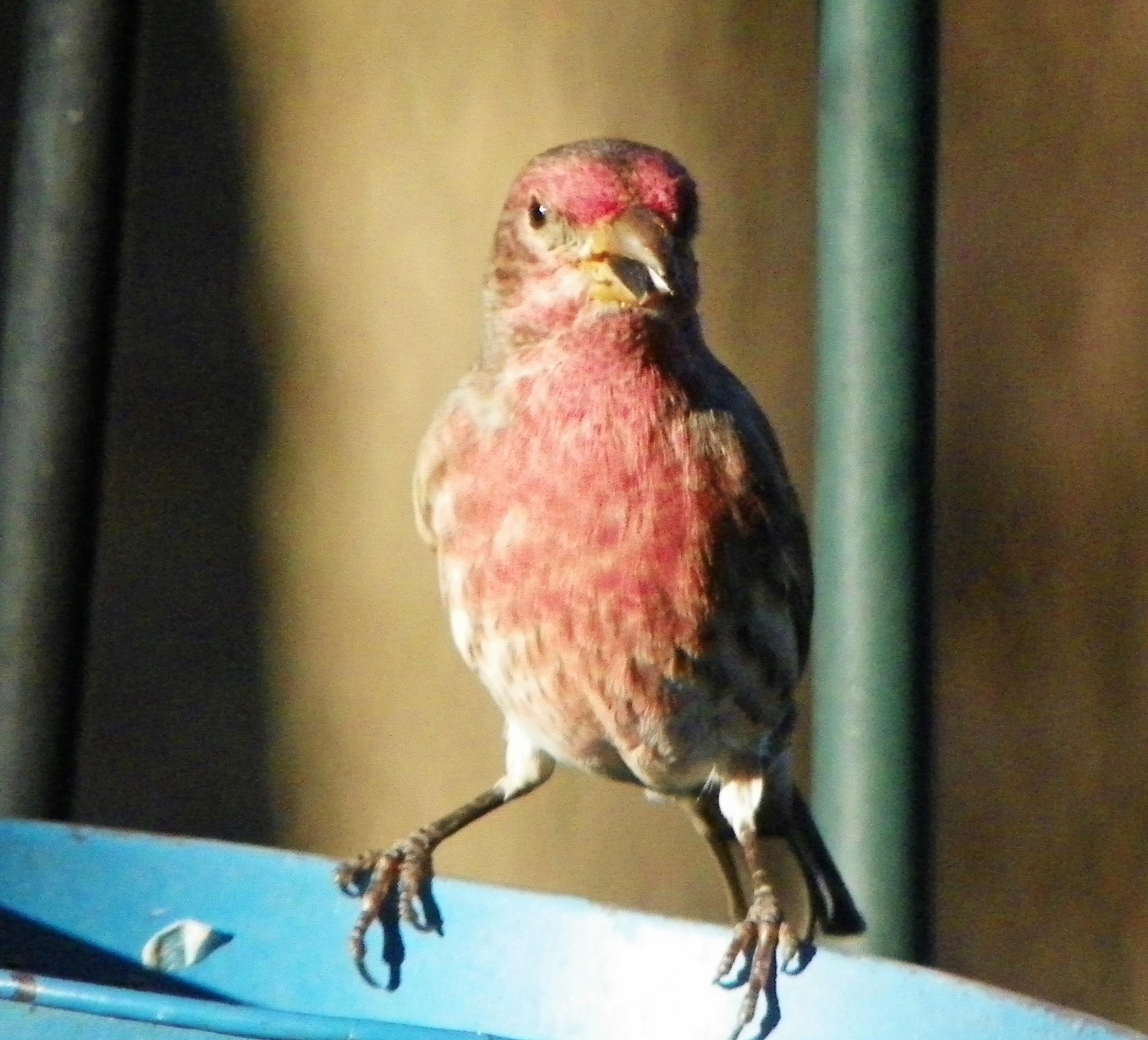 A seed in the Beak by ssmjdd