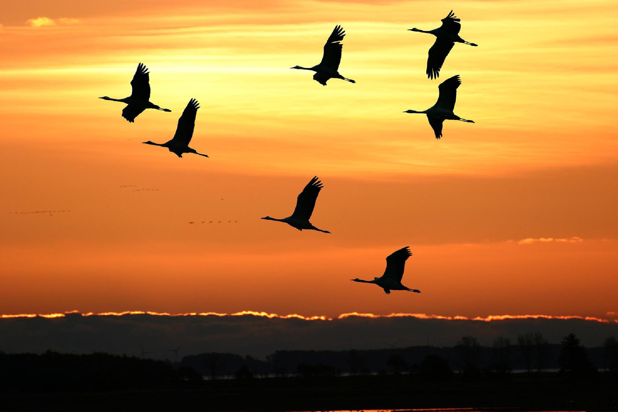 Cranes - birds of happiness by Heinrich Frhr. von Berlepsch