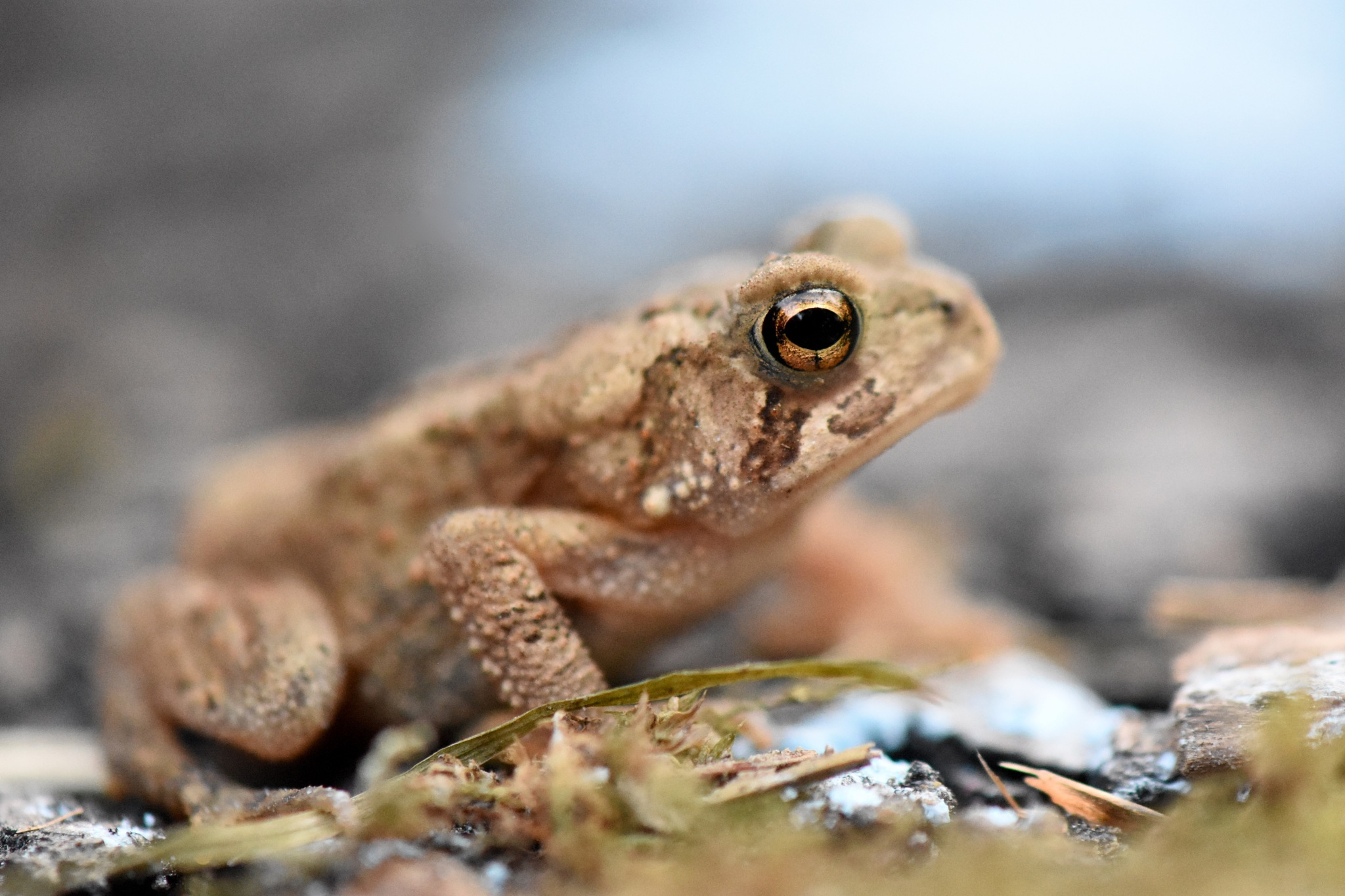Toad by Marcy Herrick