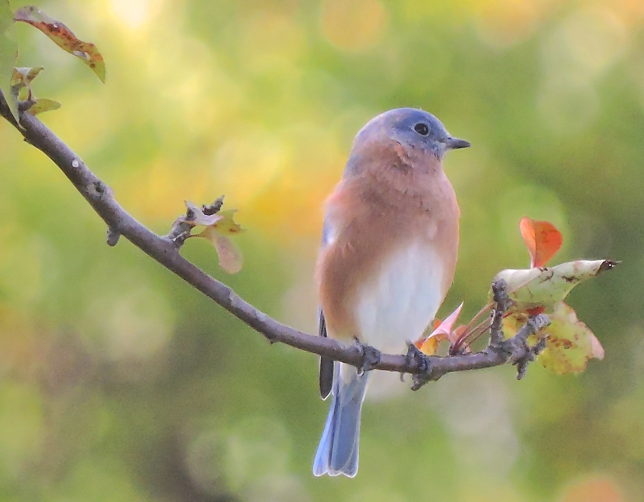 Bluebird by Marcy Herrick