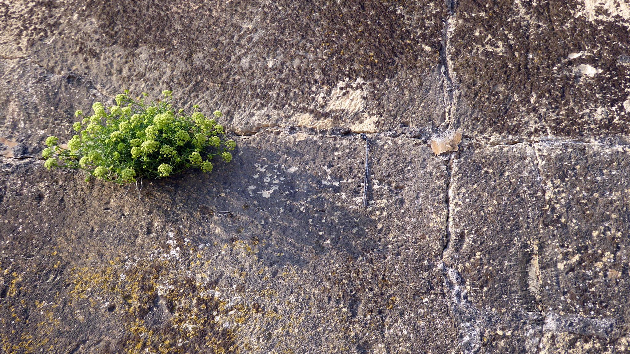 Nature finds it way, Valetta, Malta by Informatissima