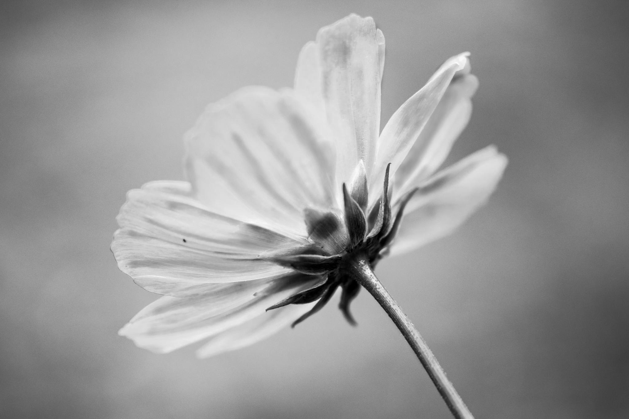 delicate  by Tracey Dobbs