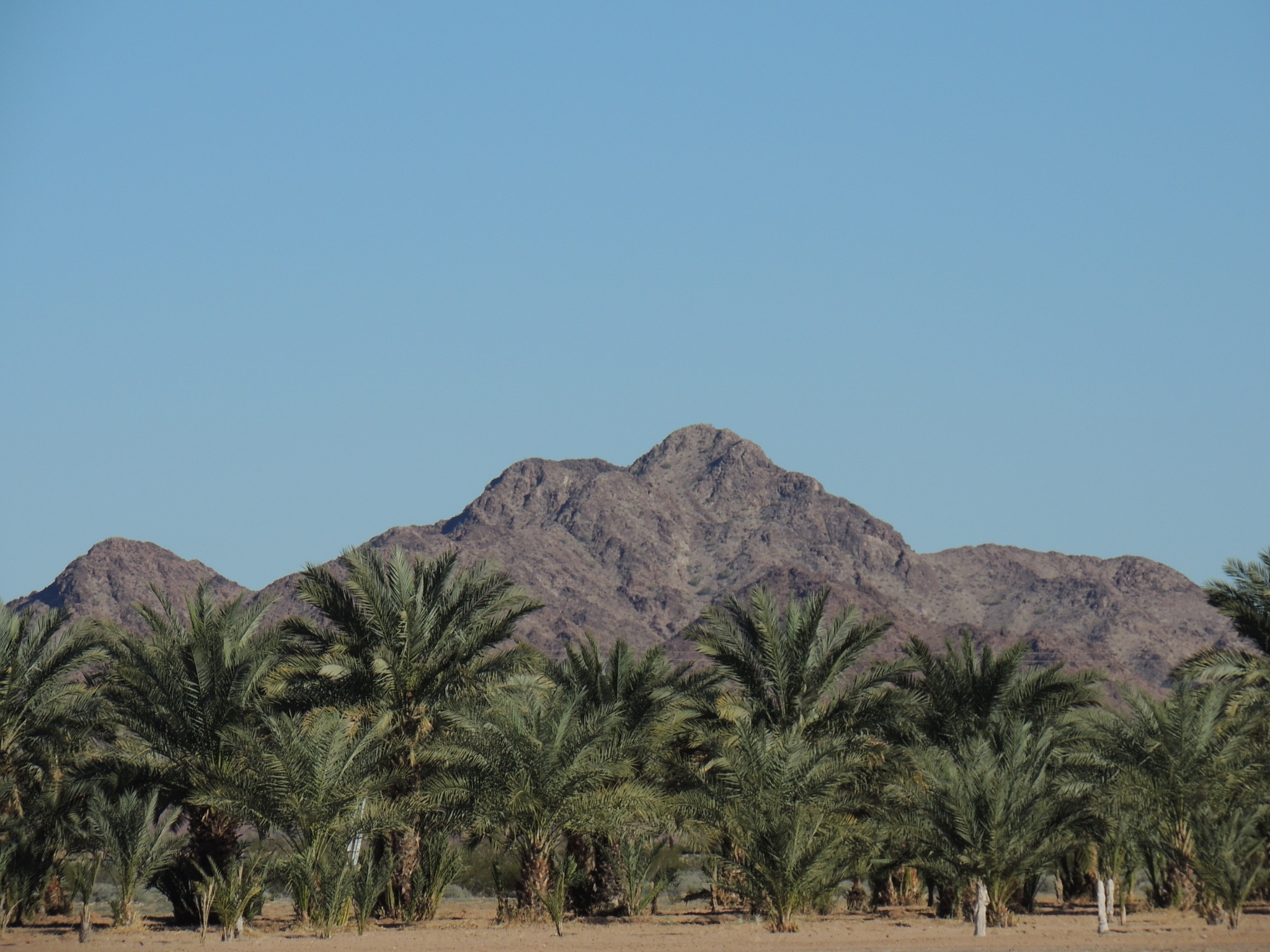 Arizona date farm by sh2020