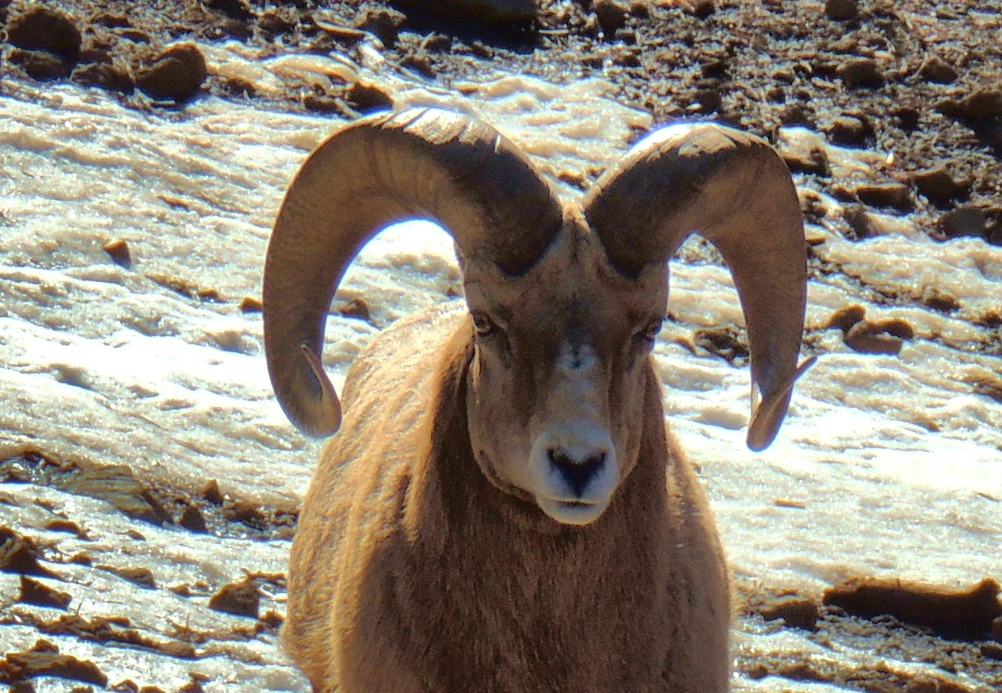 These horns weigh 30 lbs... by sh2020