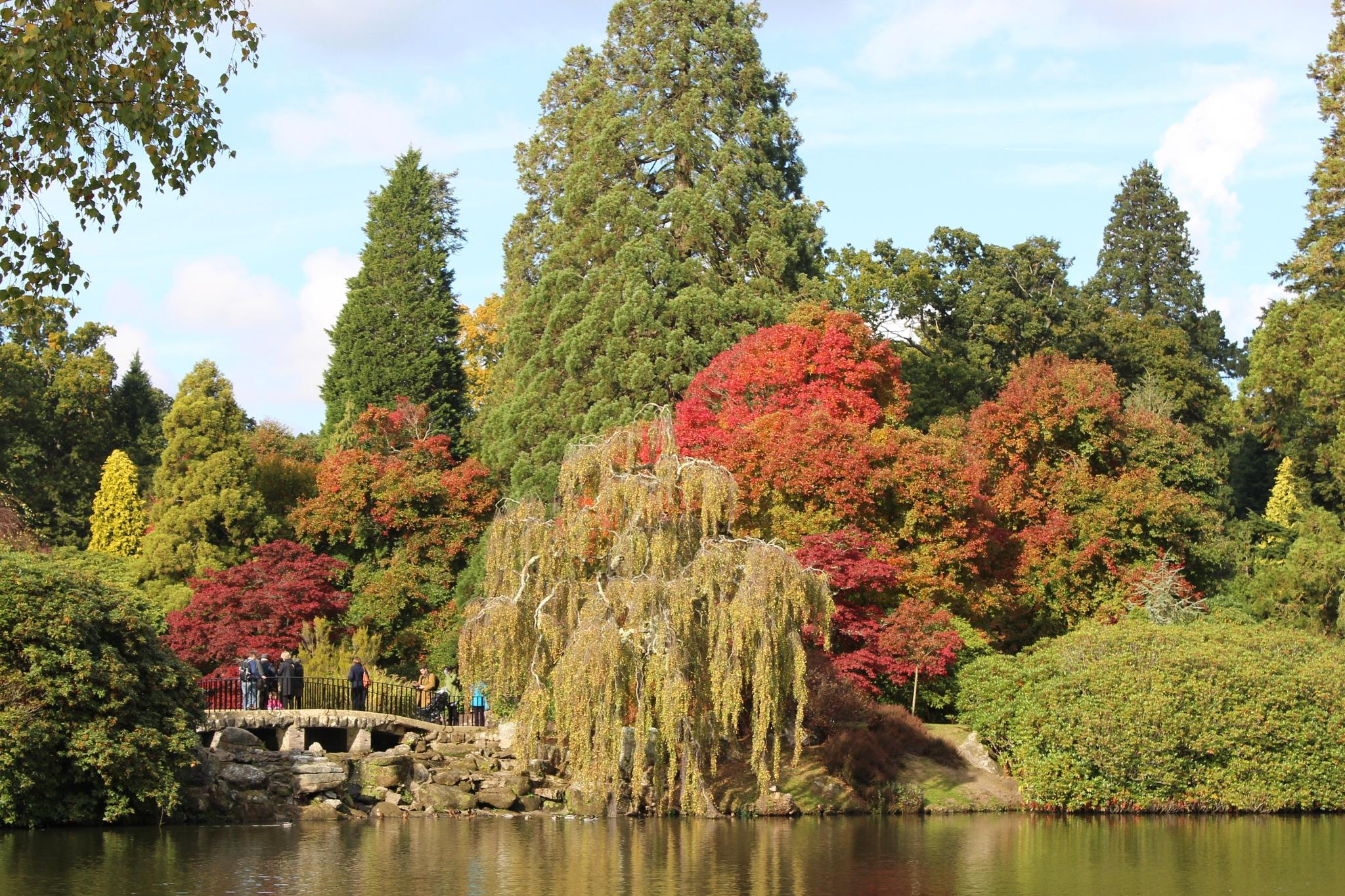 Autumn leaves by Yvonne Clover-Lambert