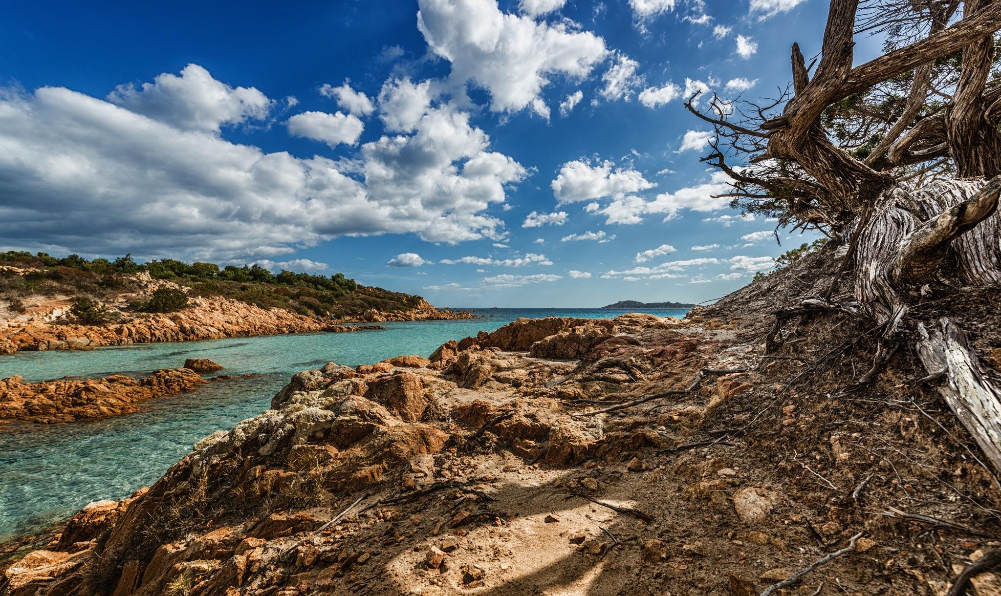 Beach juniper by Antonello Madau Antofender