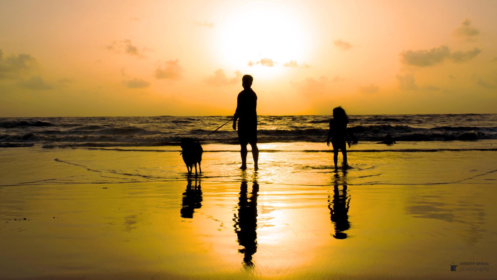 C off to Sun by SandeepBansal