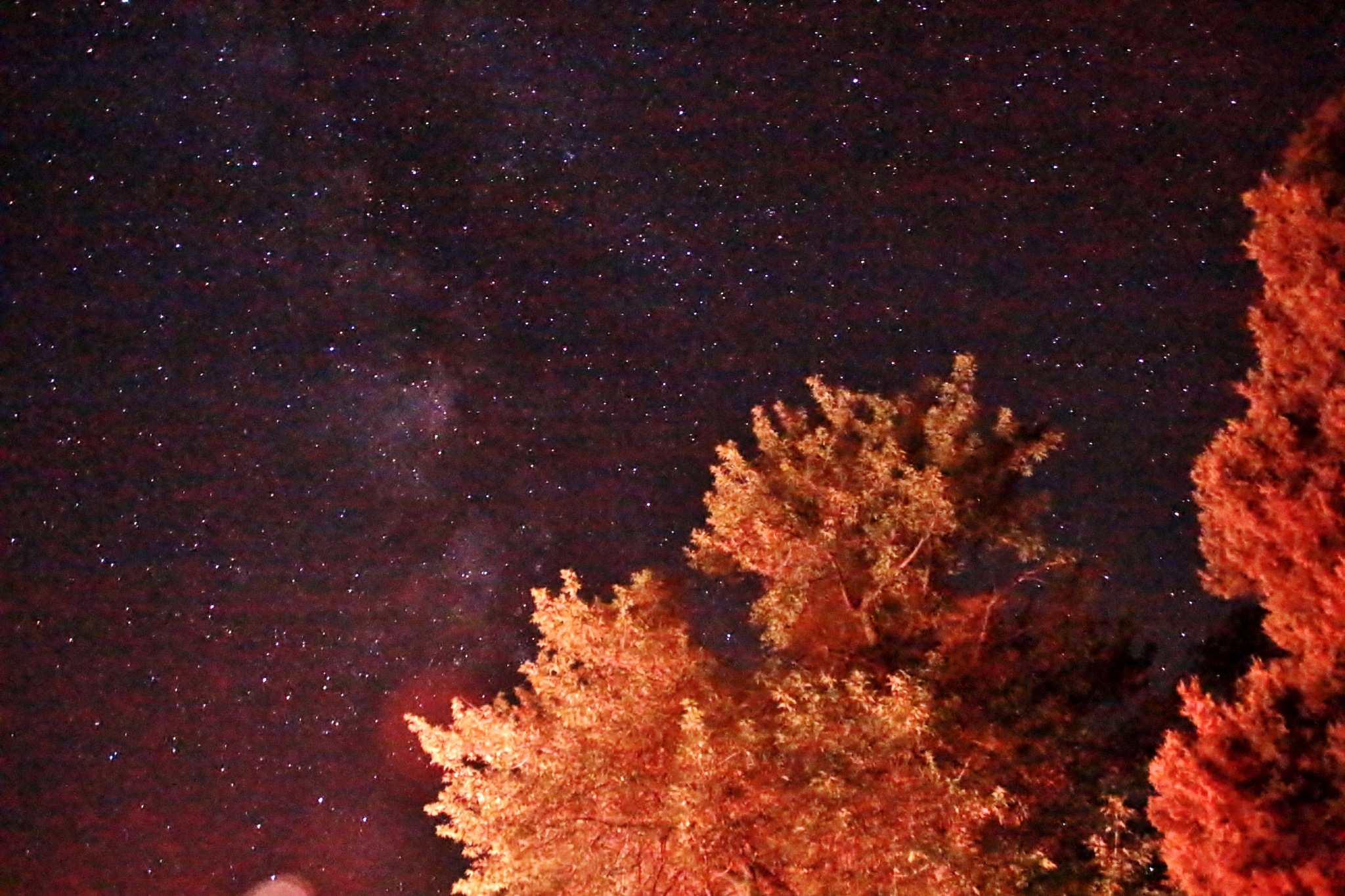 Bright Tree Against and Vivid Sky by yehaa_2001