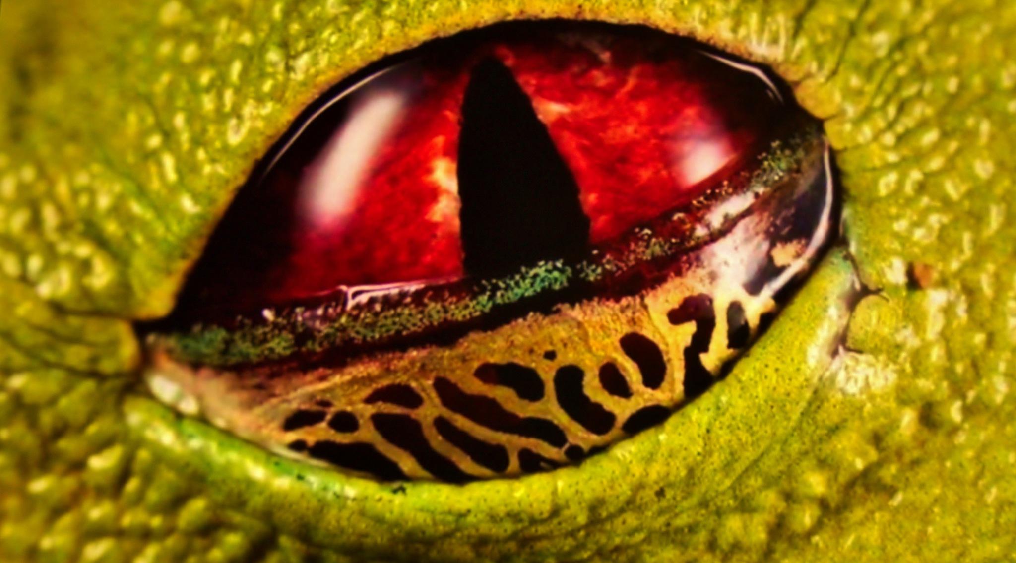 Dragon Eye by yehaa_2001