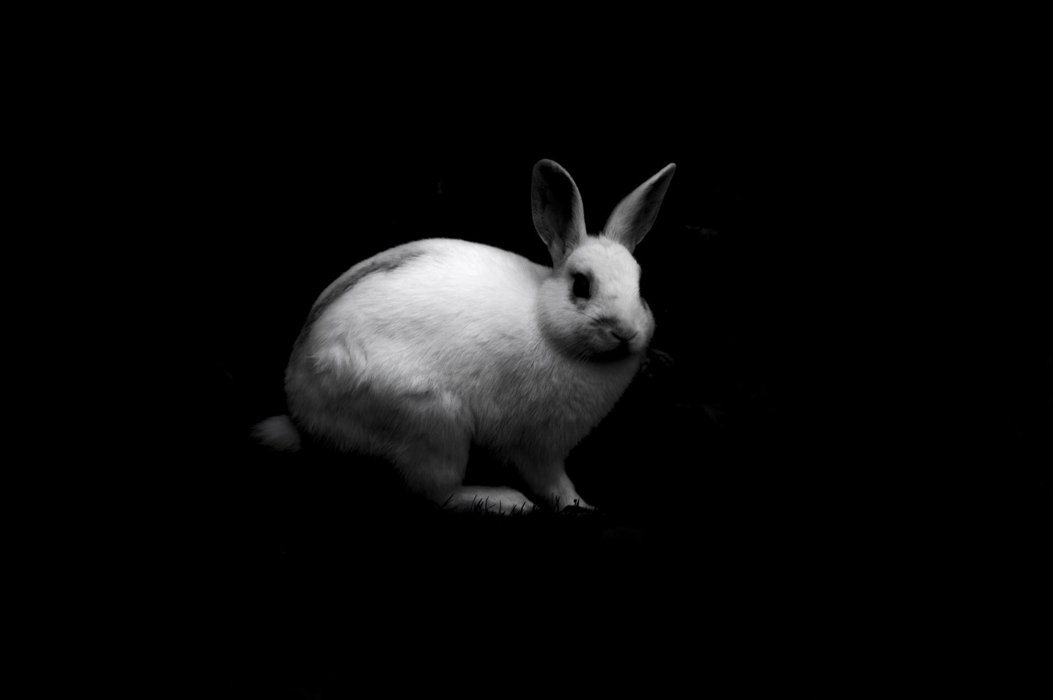 Devil Rabbit by antonioippolito