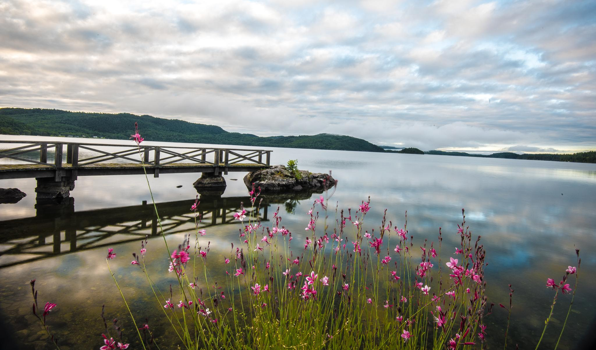 Water Flowers at the Shore by SAFIRE PHOTO