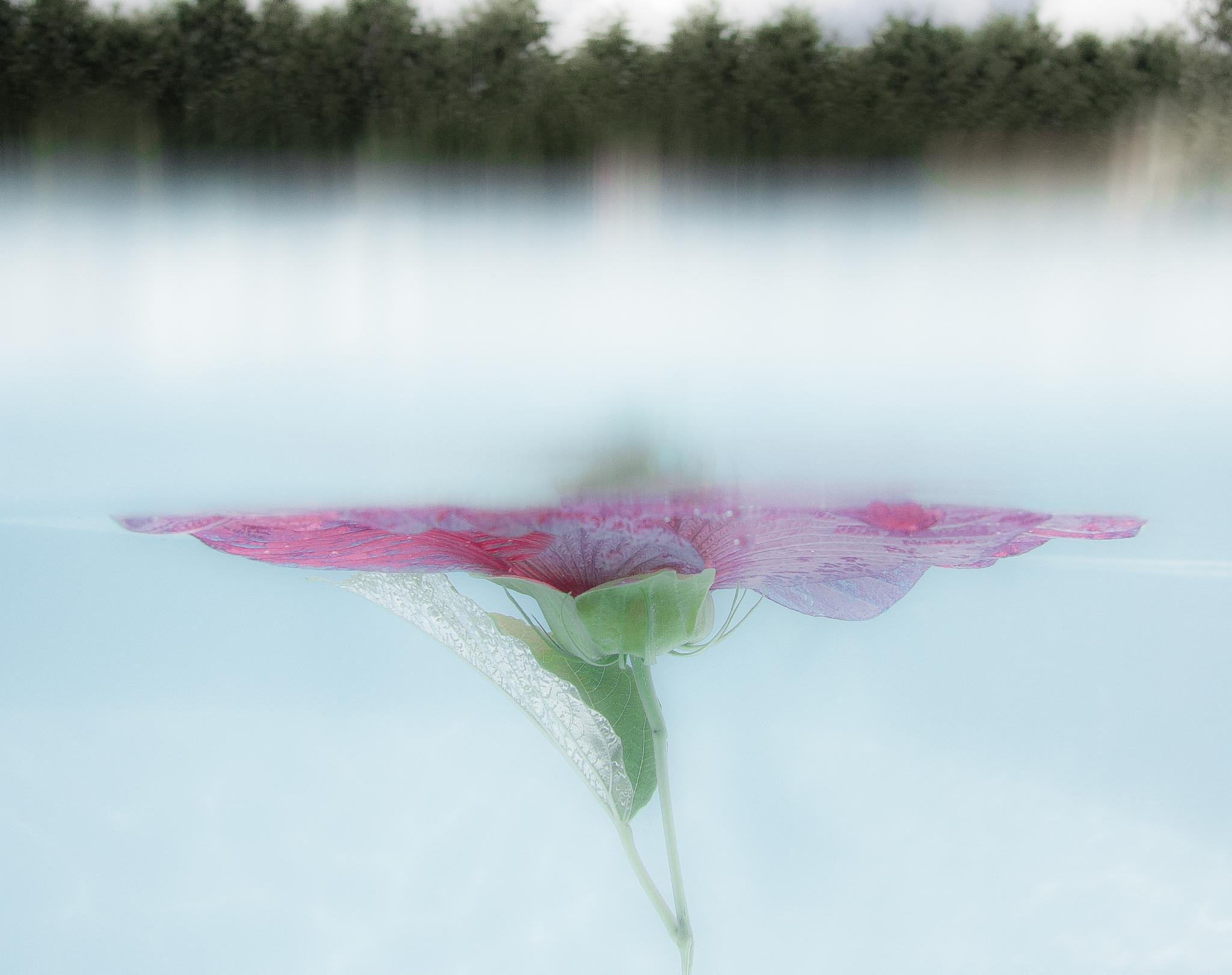 Floating Flower with Trees by SAFIRE PHOTO