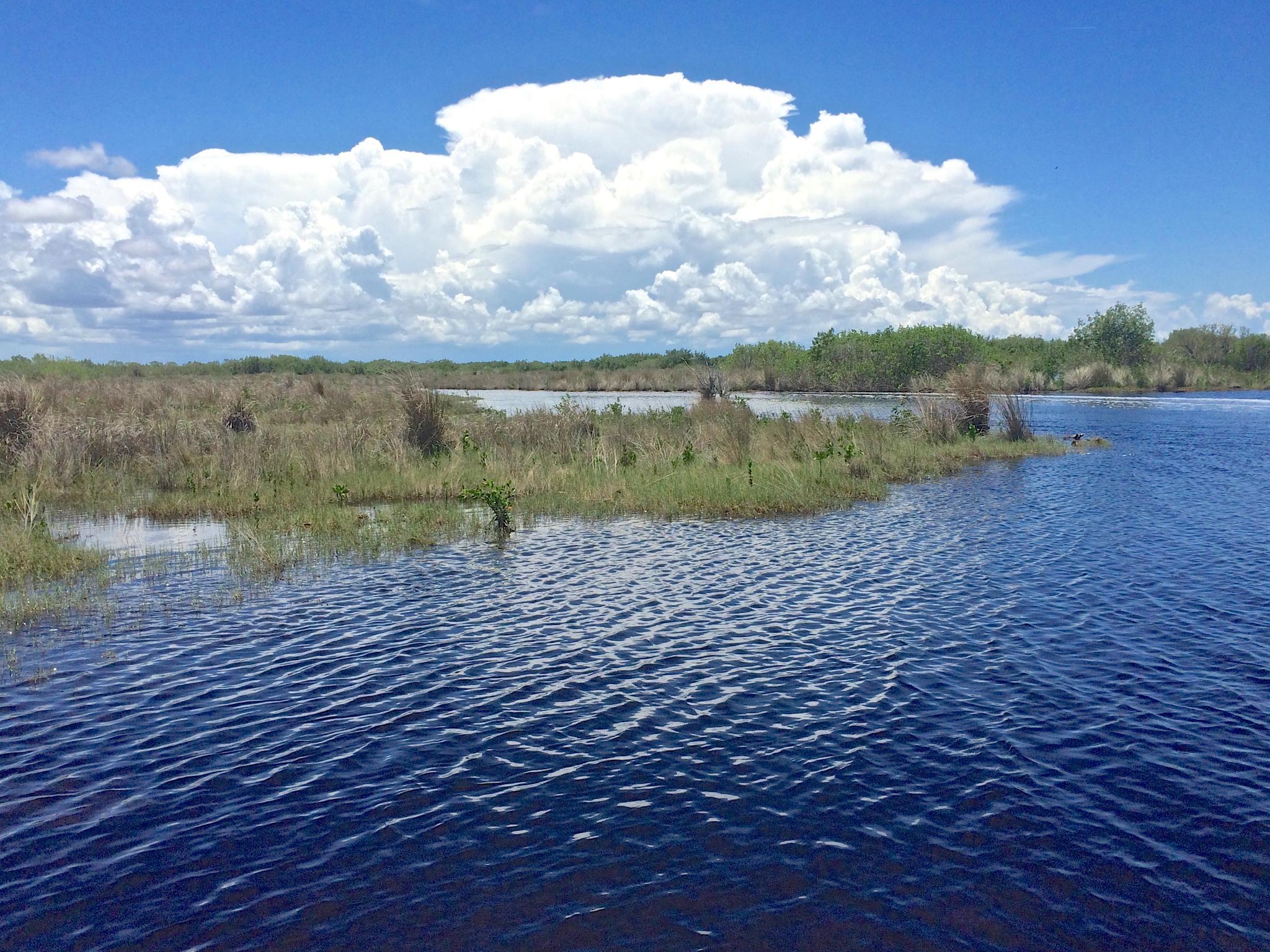 Everglades by marianne250