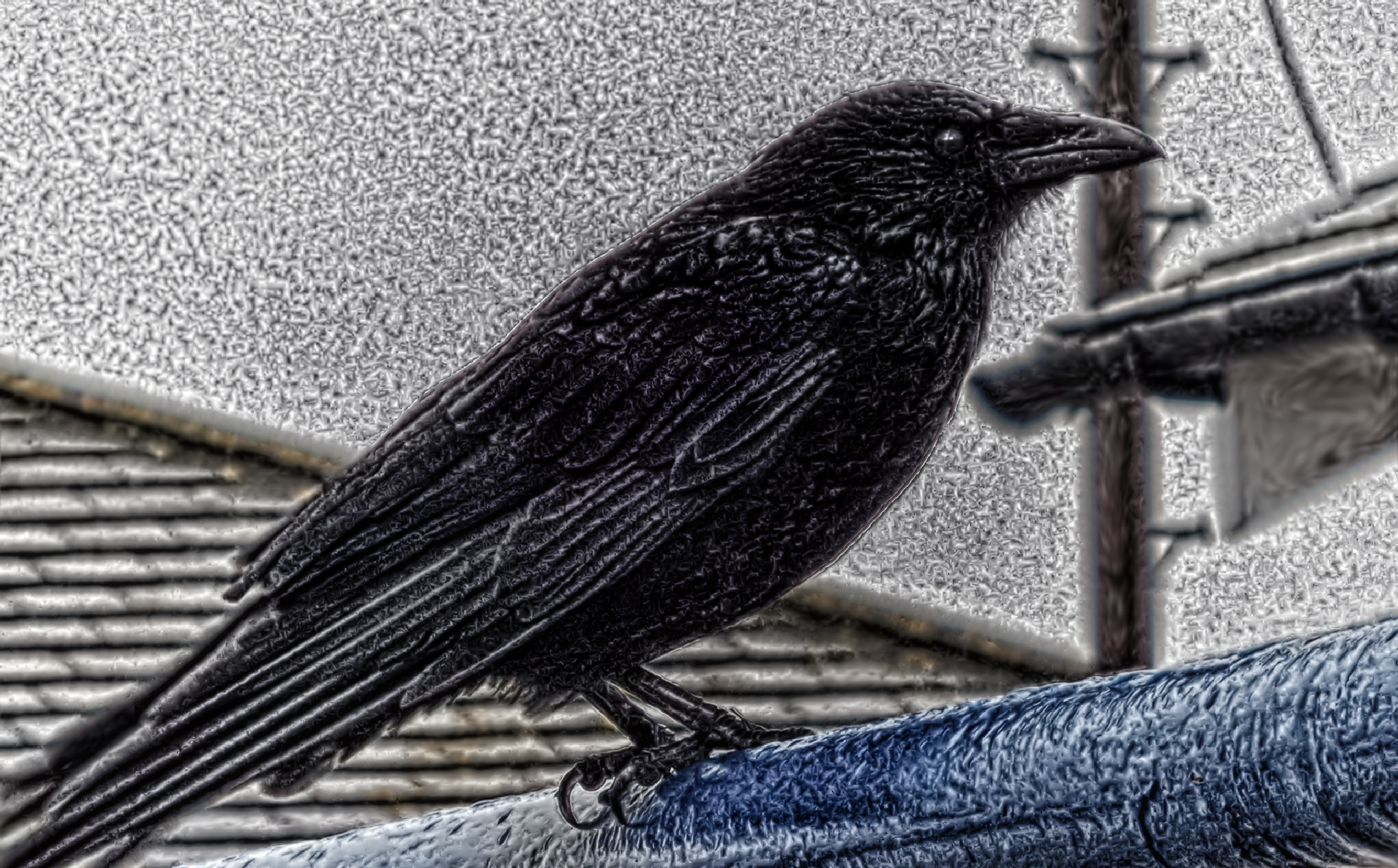 Noisy Bird by ED McIntosh