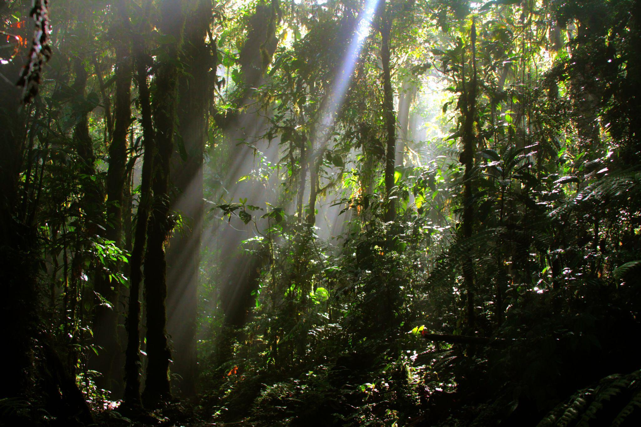 Monteverde Foresta by fotoroberto
