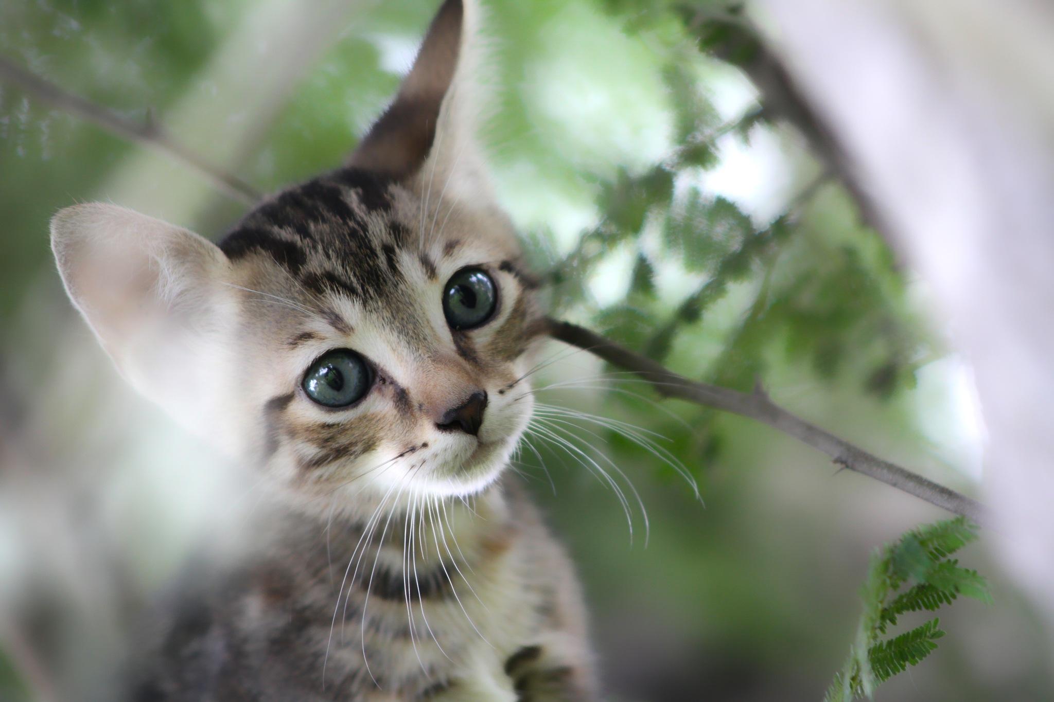 :) Gatito en el arbol by fotoroberto