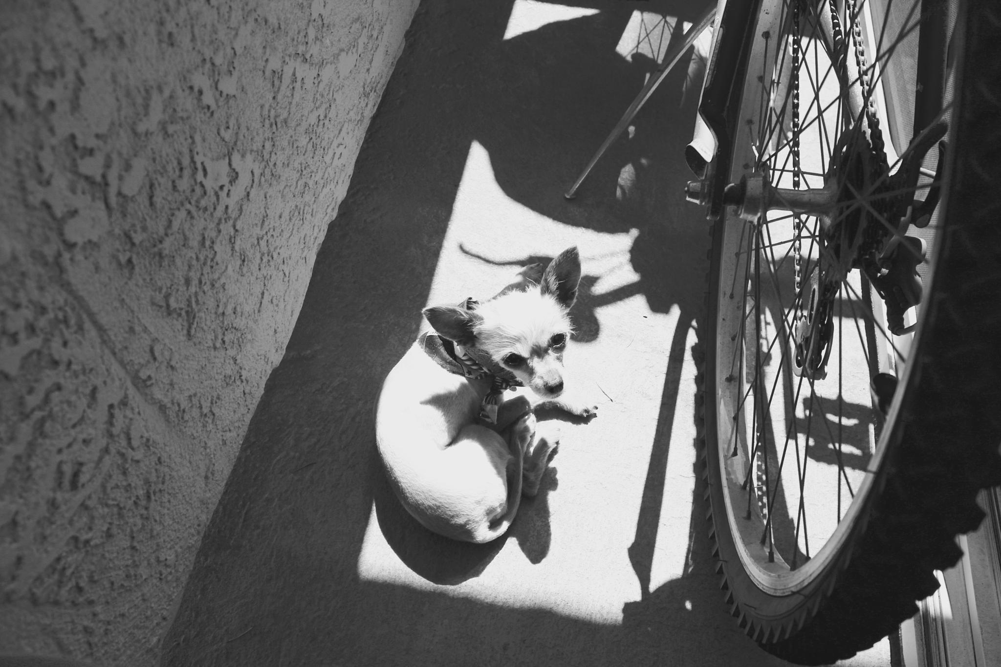 Sunbathing by Snickandmephotography