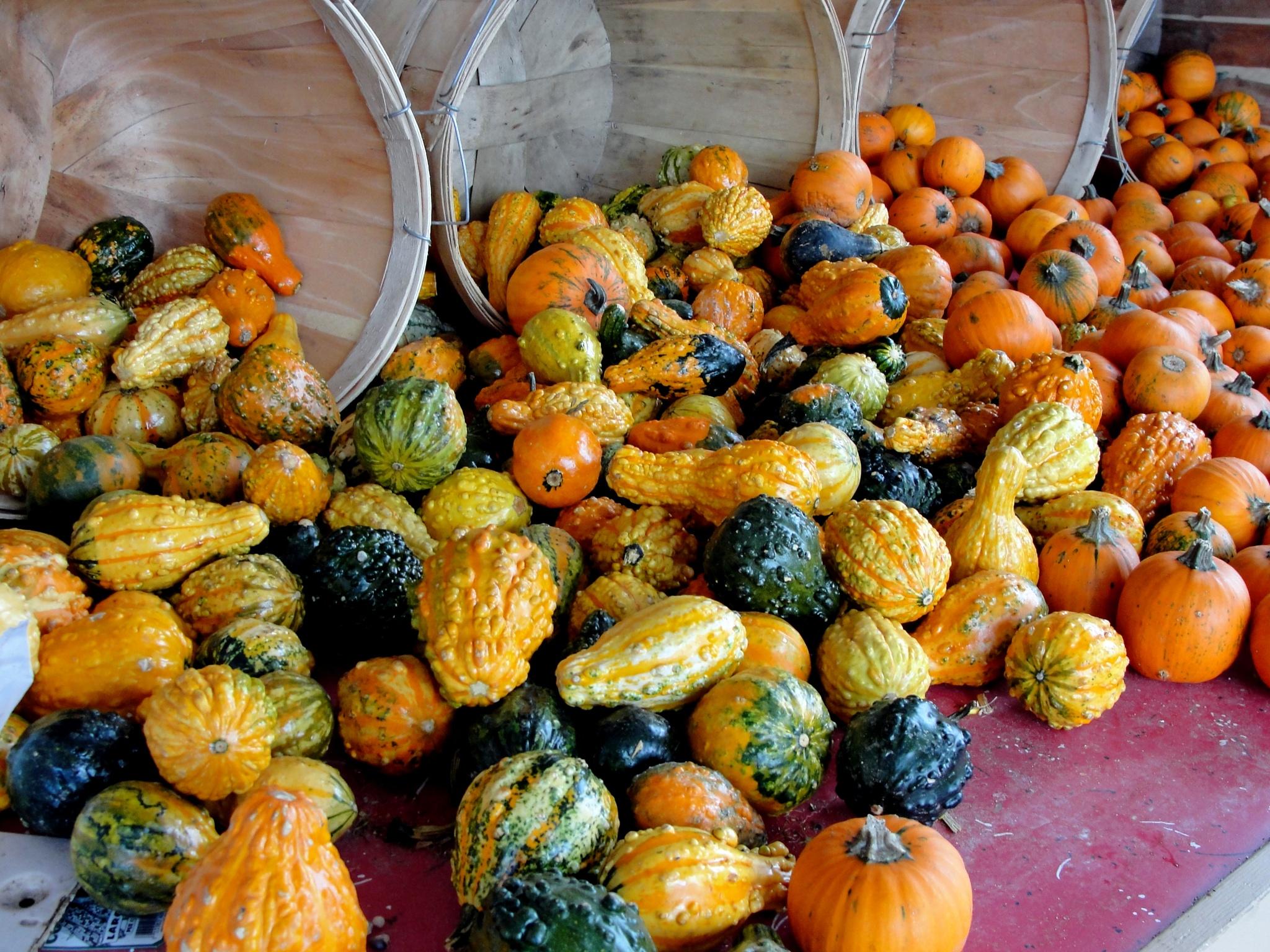Fall Produce by cbaron