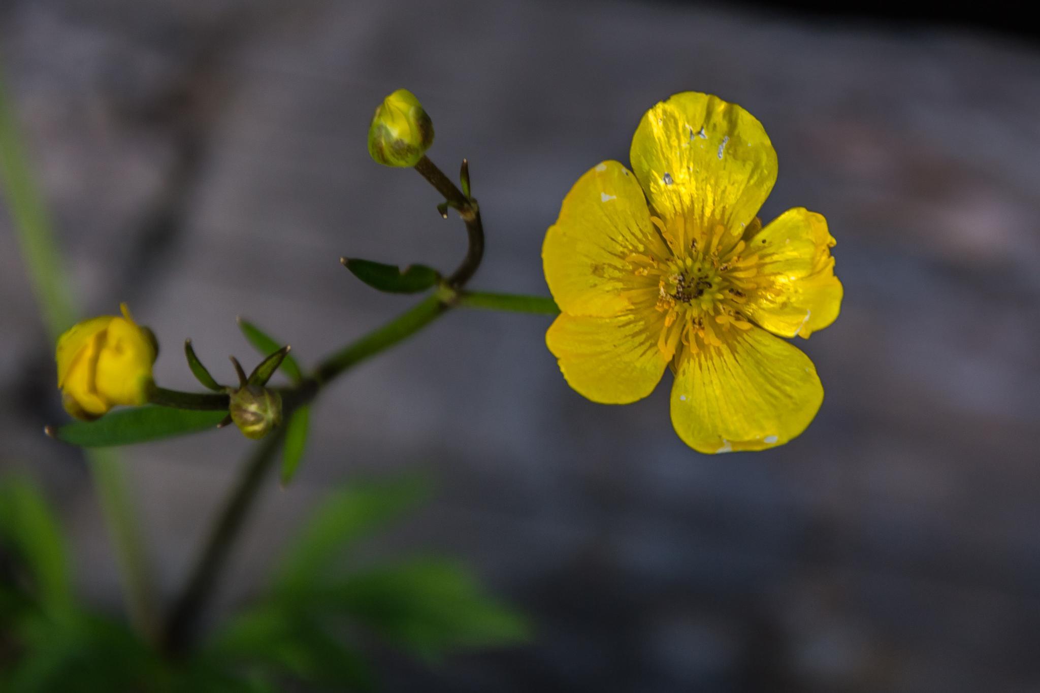 Цветок by Vladimir Бобришев