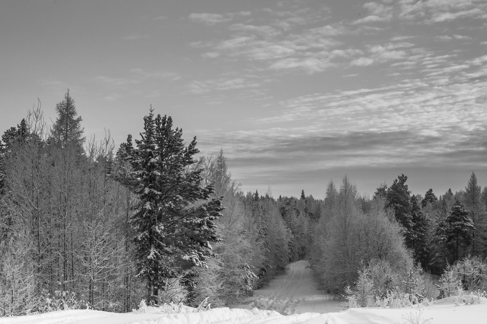 Зимний лес by Vladimir Бобришев