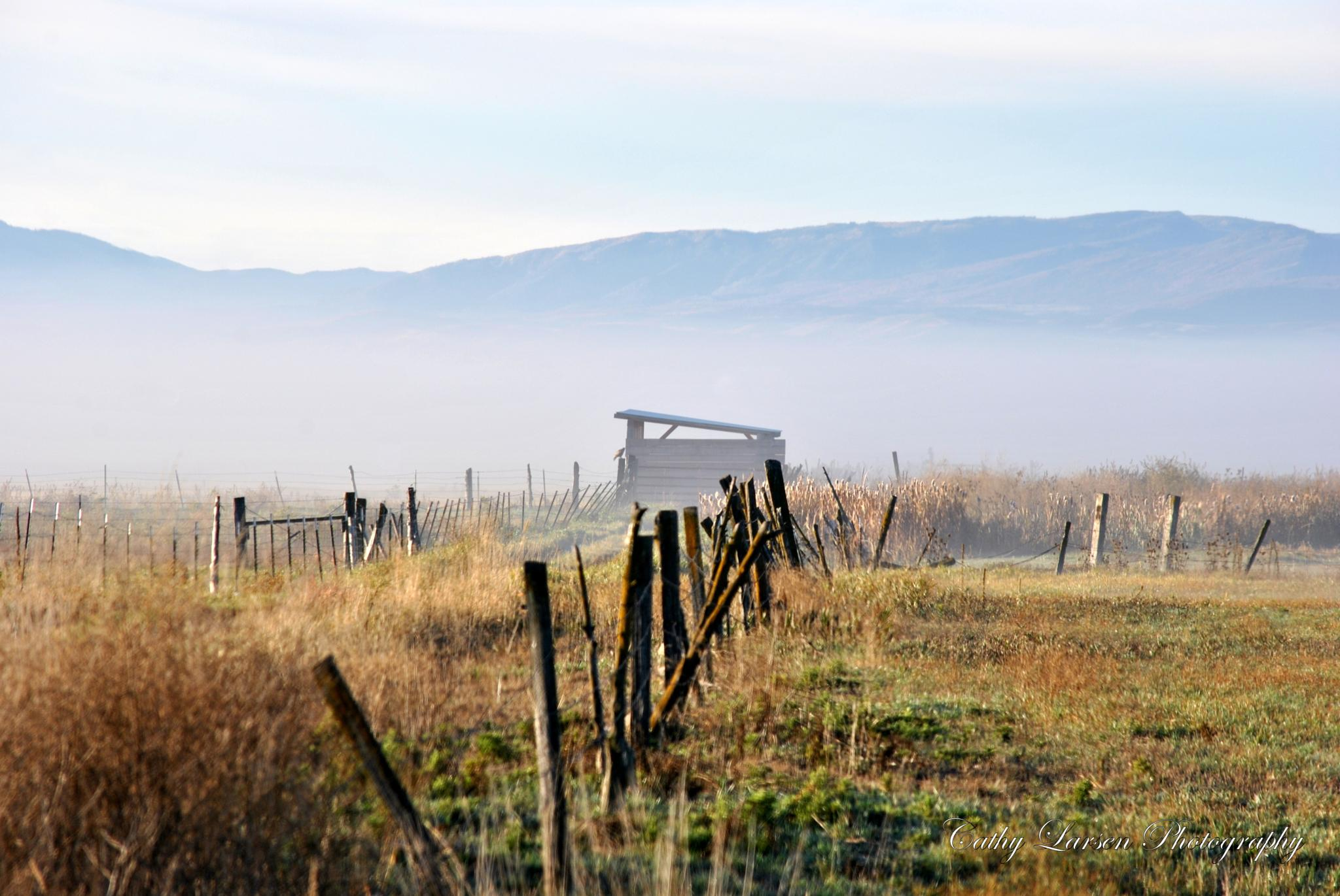Foggy Morning by crlarsen